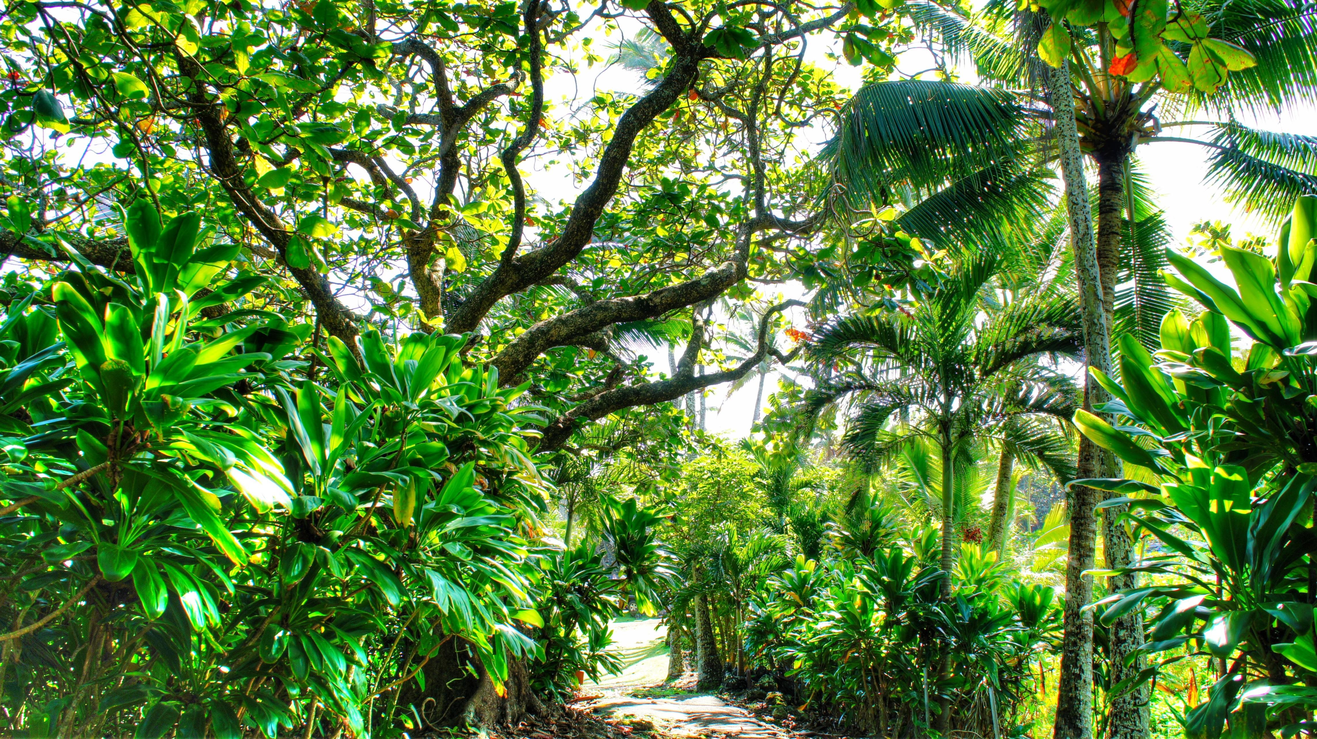 Wallpaper : waterfall, beach, branch, green, palm trees, jungle ...