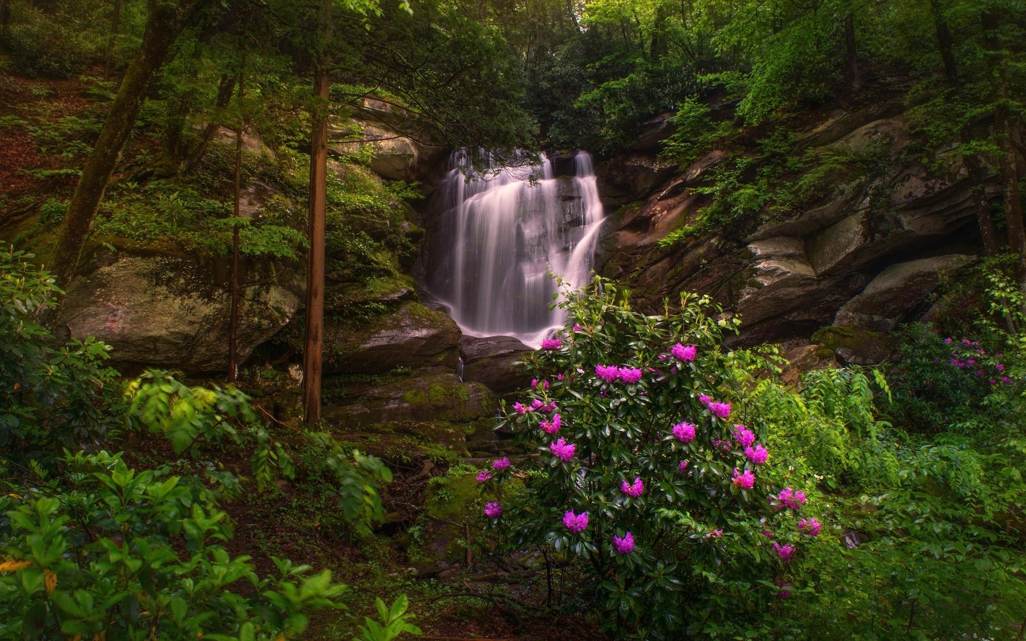 картинки поляна с рекой цветами водопадом несколько основных