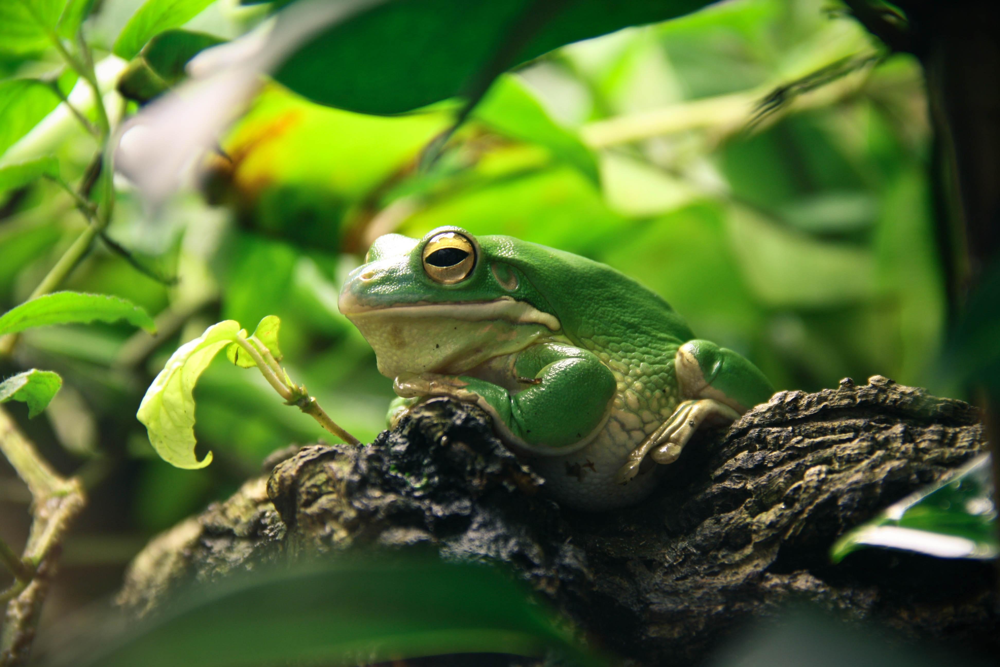 картинки красивые с лягушками реабилитации