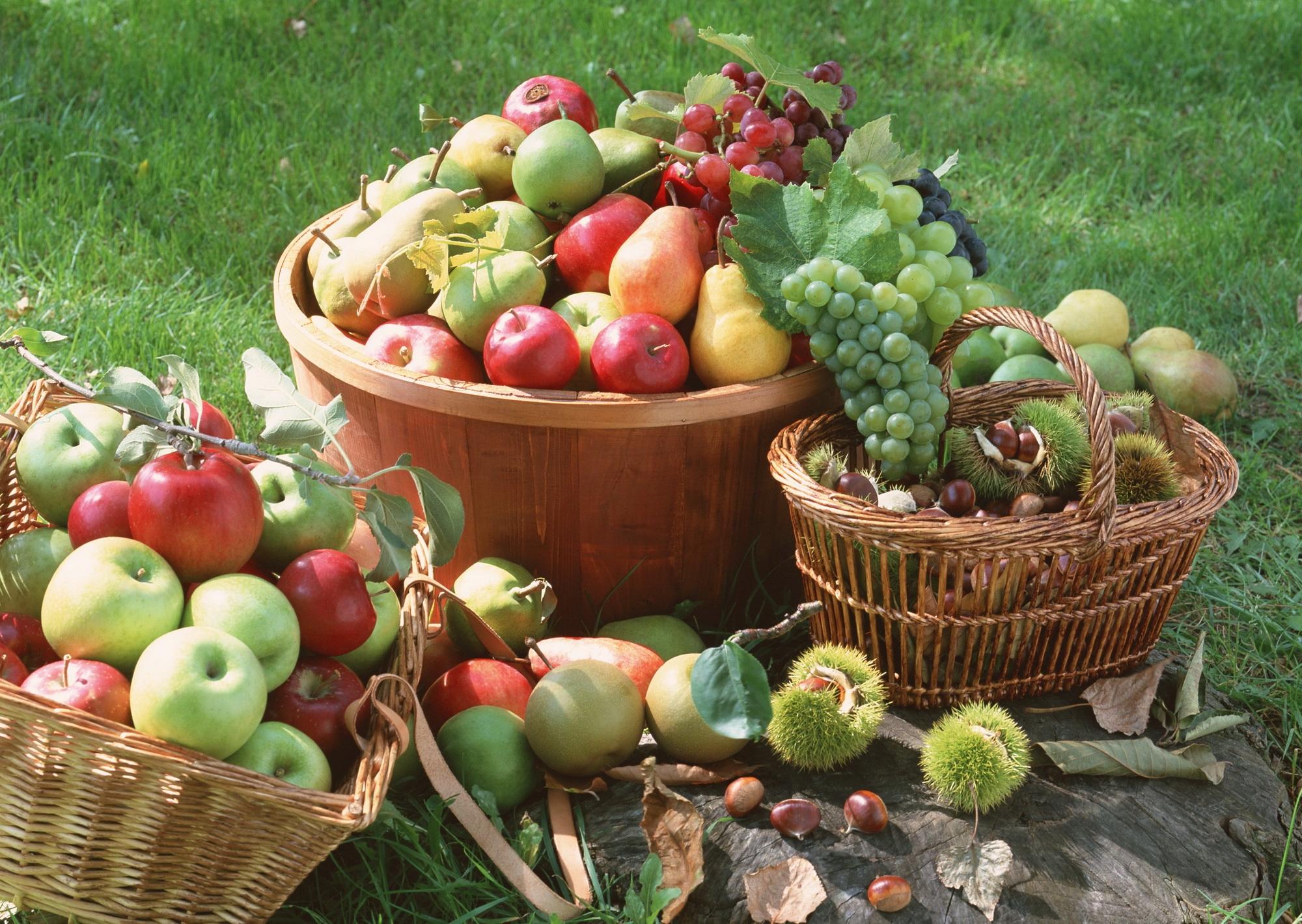 этой как картинки богатый урожай овощей нашем интернет-магазине