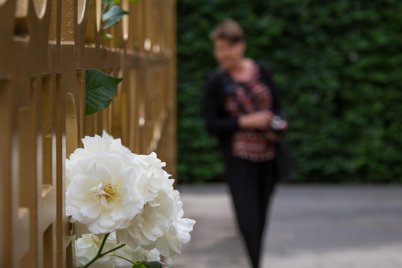 Hintergrundbilder Garten Deutschland Rose Ros Frühling