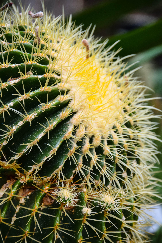 fond d 39 cran rue les plantes cactus su de sverige fleur vue de la ville flore sk nel n. Black Bedroom Furniture Sets. Home Design Ideas