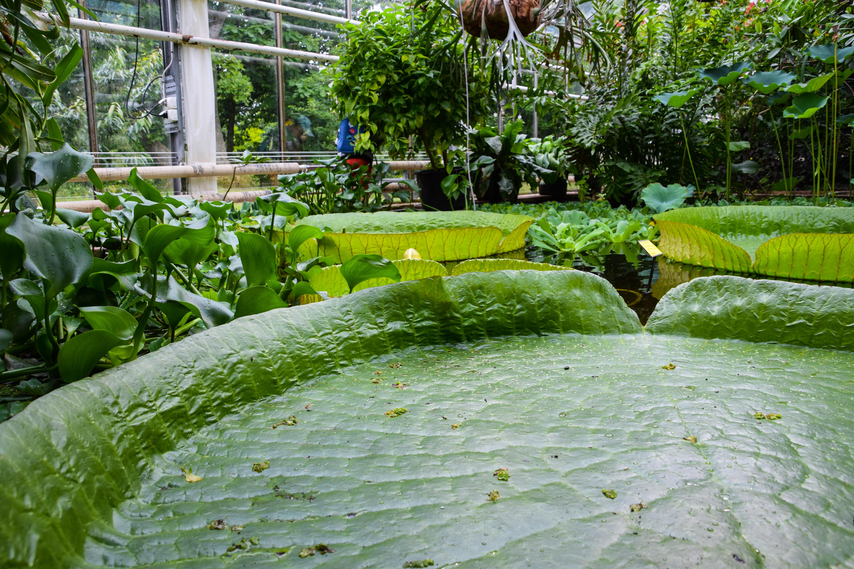 Piante privacy giardino con stagno artificiale giardino - Giardino artificiale ...