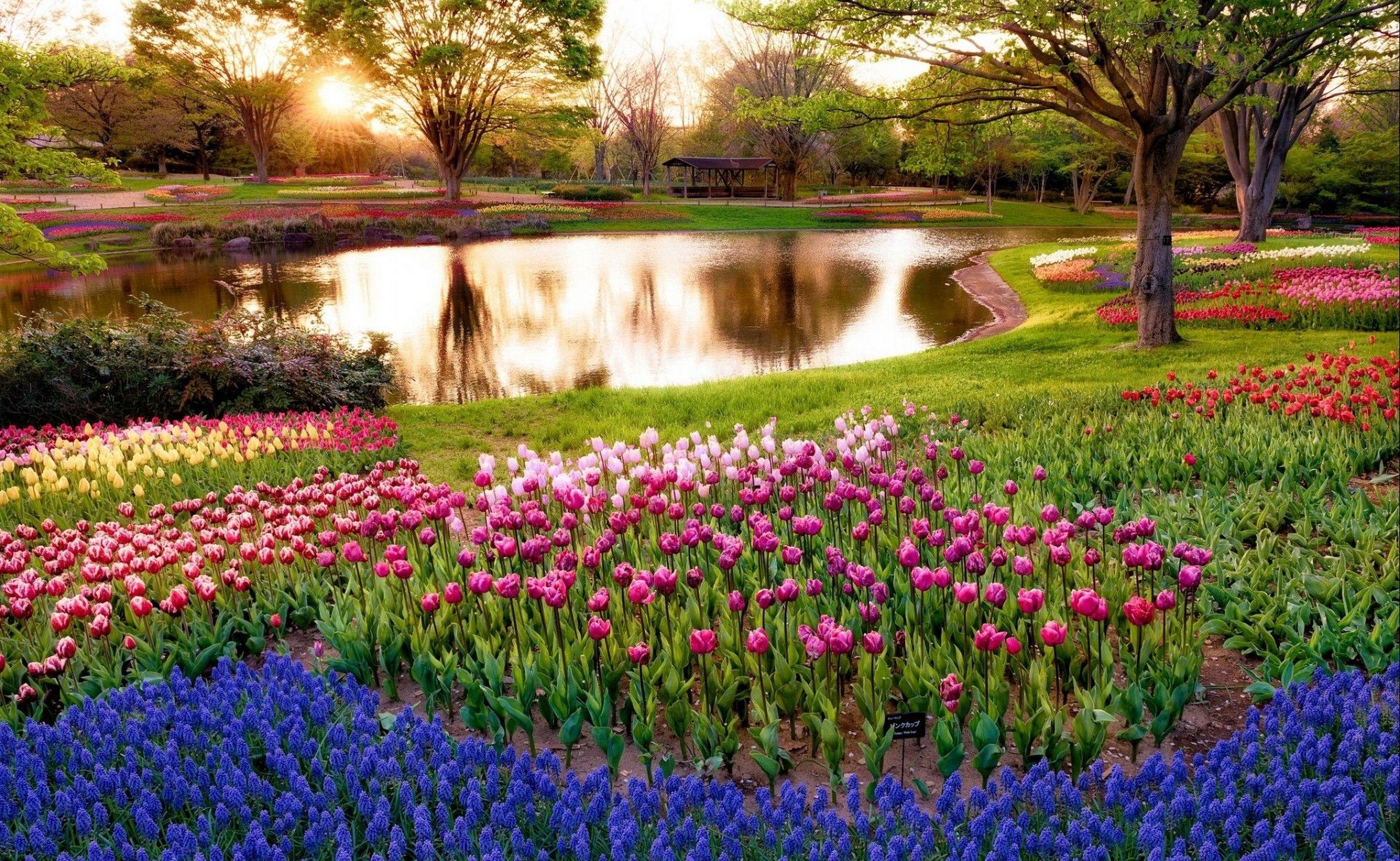 Fond D Ecran Lac La Nature Parc Tulipes Fleur Flore Prairie