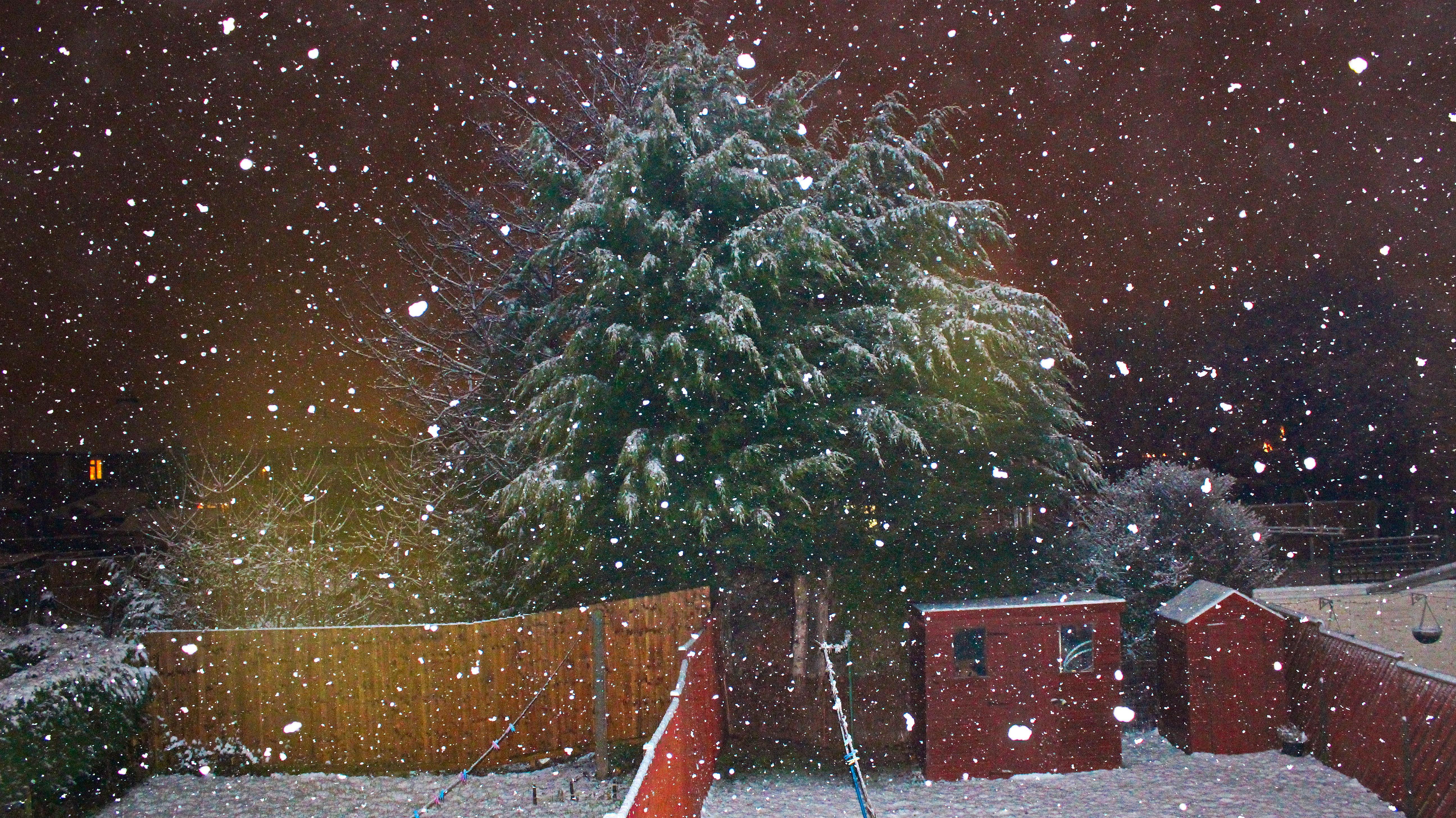 Weihnachtsbaum England.Hintergrundbilder Garten Nacht Natur Schnee Winter England