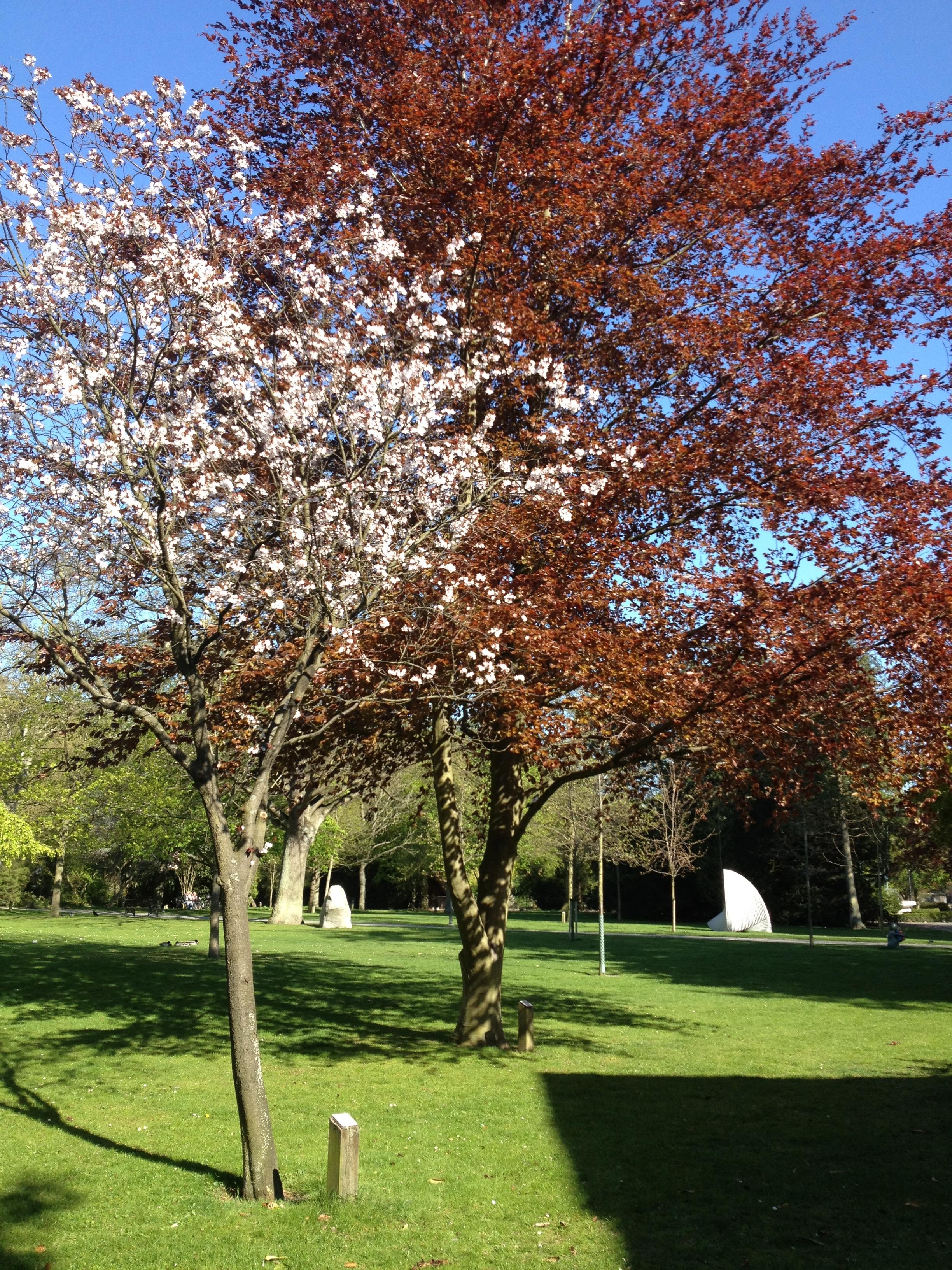 Fond D écran Jardin Parc Branche Fleur Printemps