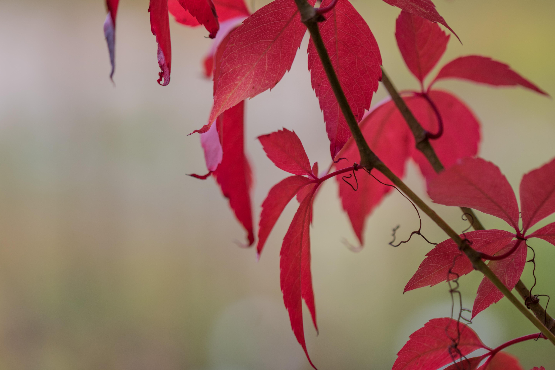Fond D Ecran Jardin Rouge Parc Branche Fleur Rose Couleur