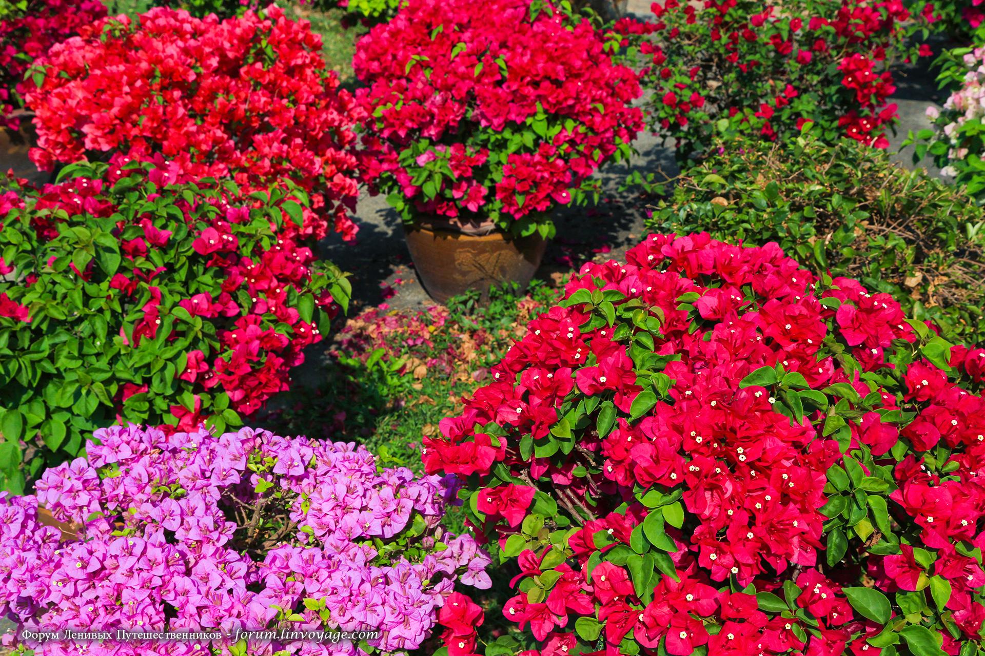 Fondos de pantalla rojo cielo azul brillante follaje for Arbol rojo jardin
