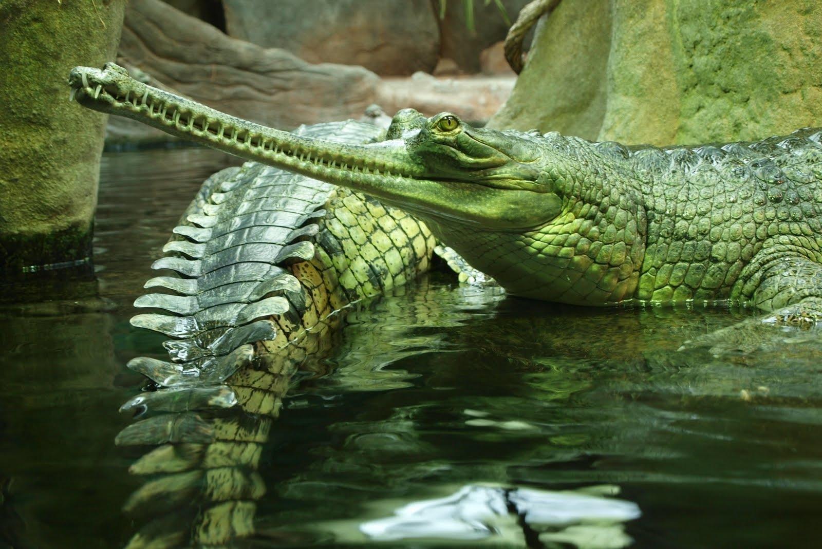что кошка крокодил фото картинки разберемся, как