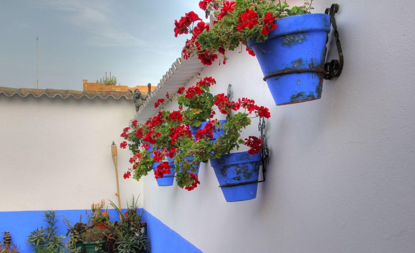 Цветы в горшках на стену фото