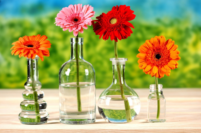 デスクトップ壁紙 ガーベラ フラワーズ 明るい 花瓶 水 ライン