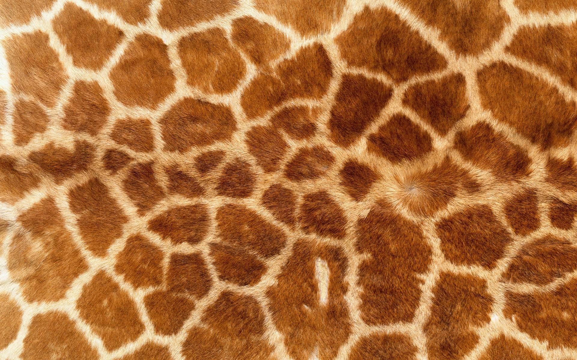 デスクトップ壁紙 キリン パターン 野生動物 毛皮 動物柄 動物相 哺乳類 19x10 Px 鼻 ギラ科 生物 Terrestrial Animal 19x10 Wallhaven デスクトップ壁紙 Wallhere