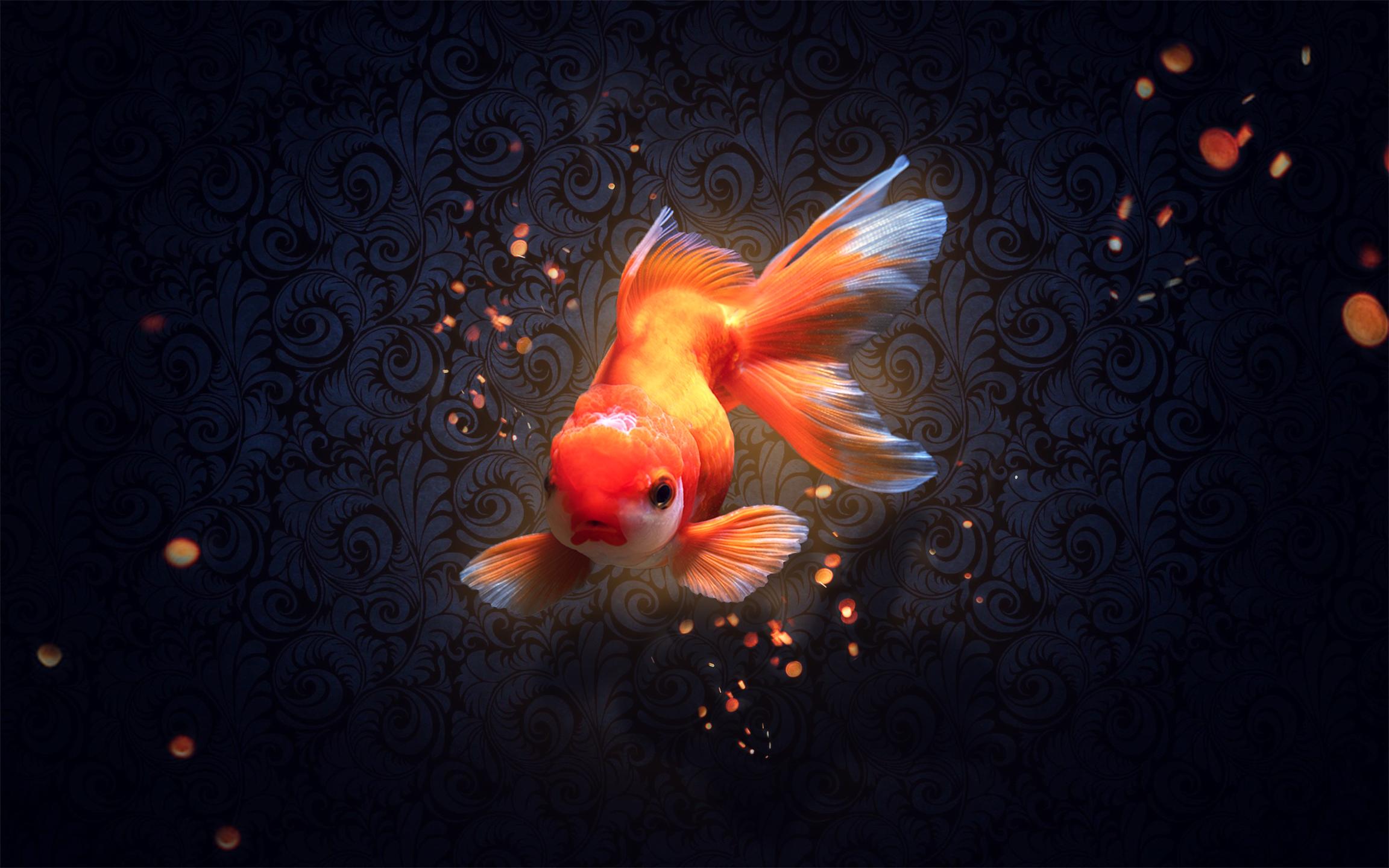 красивые картинки с рыбками золотыми рыбками прежде стеснялась выкладывать