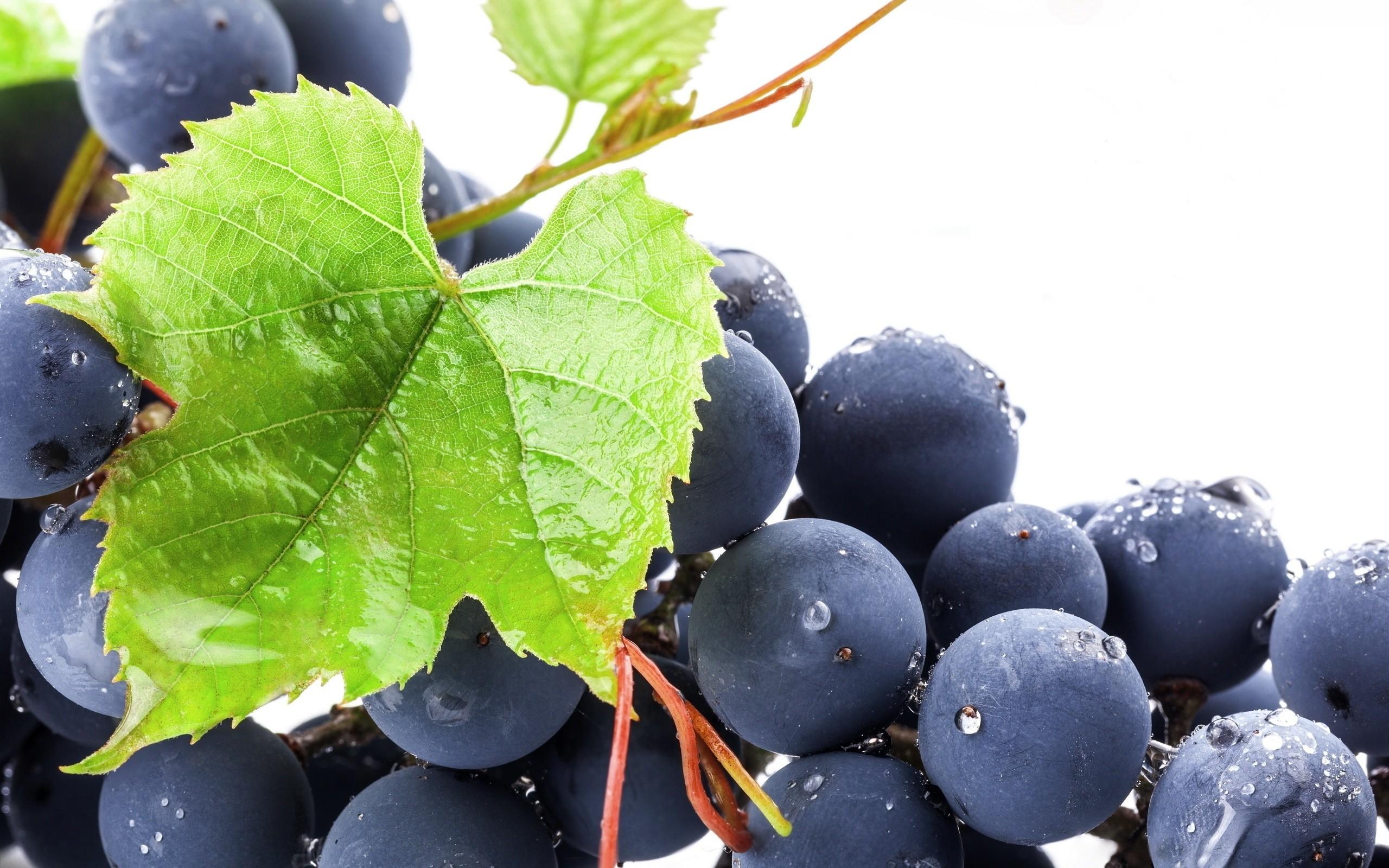 картинки ягод винограда сквер расположен