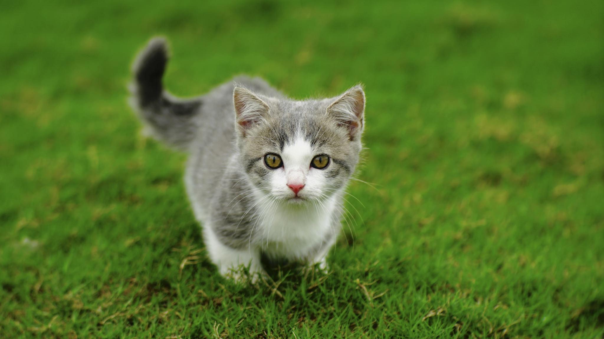 Fondos De Pantalla Césped Gato Animales 2048x1152