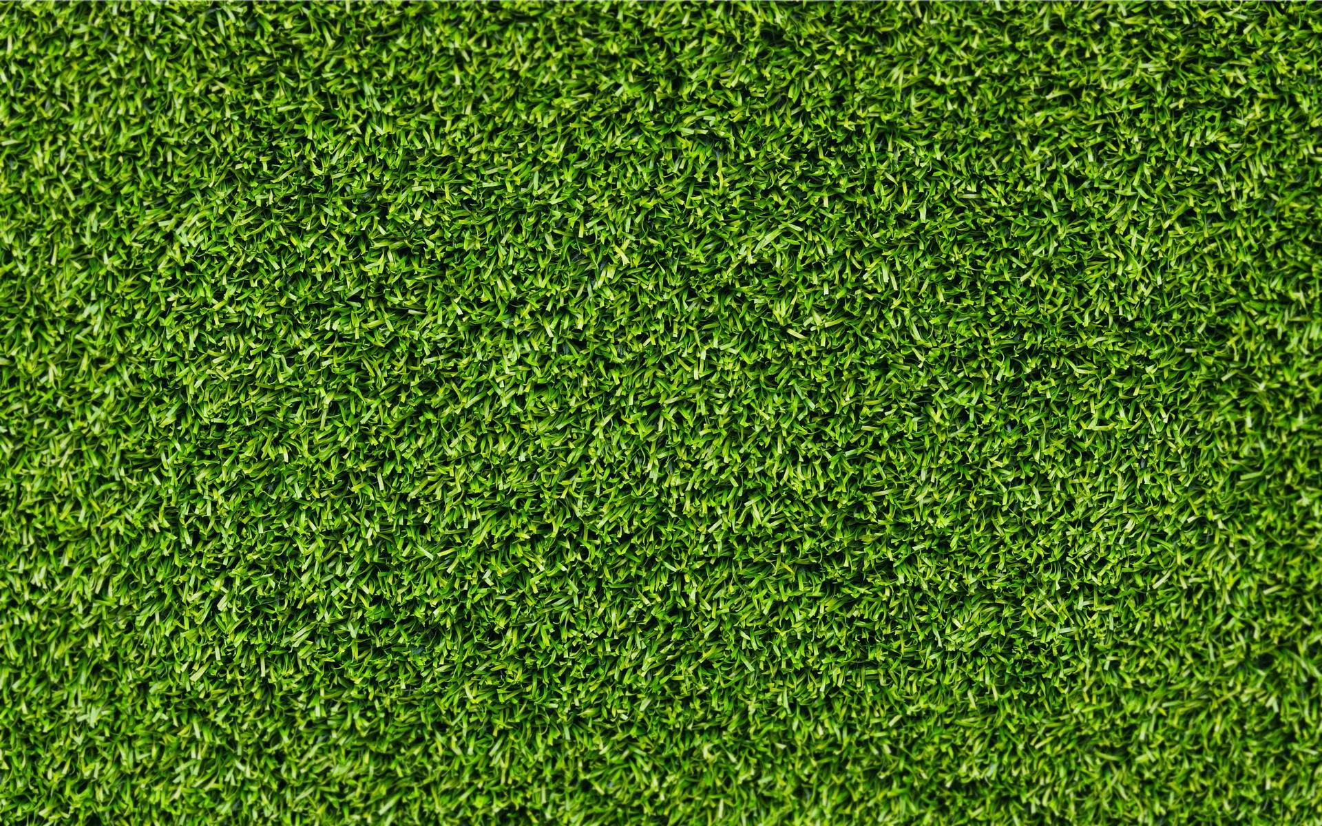 fond d 39 cran herbe champ mousse vert texture feuille prairie plante pelouse sol. Black Bedroom Furniture Sets. Home Design Ideas