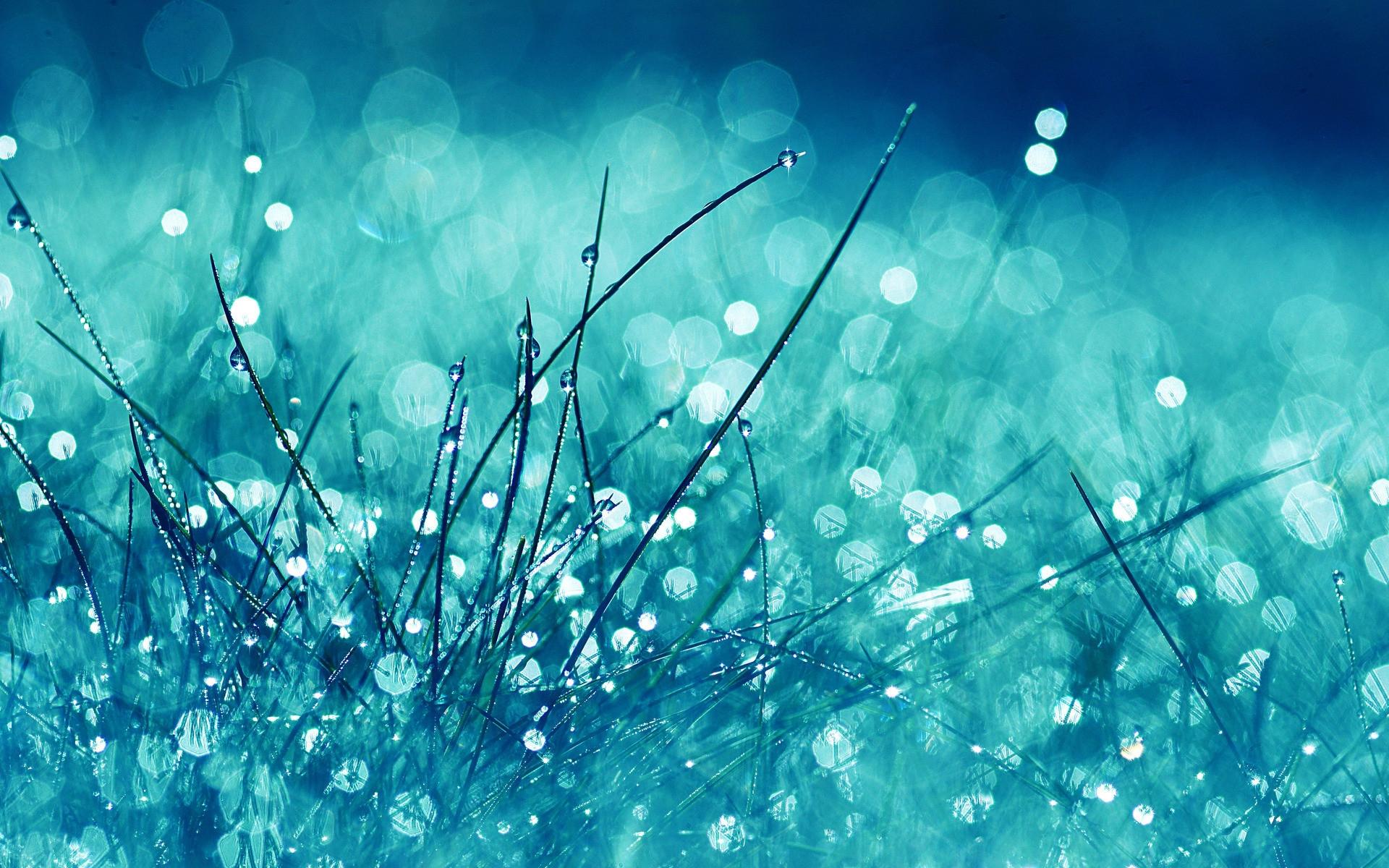 Wallpaper Grass Glare Glitter Light Bright 1920x1200