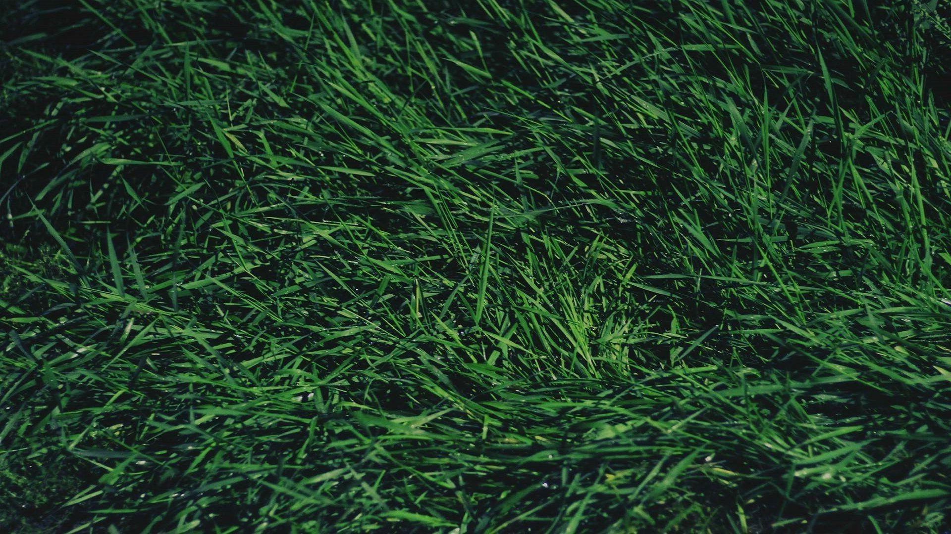 Fondos de pantalla c sped verde hoja flor 1920x1080 for Tierra suelo wallpaper