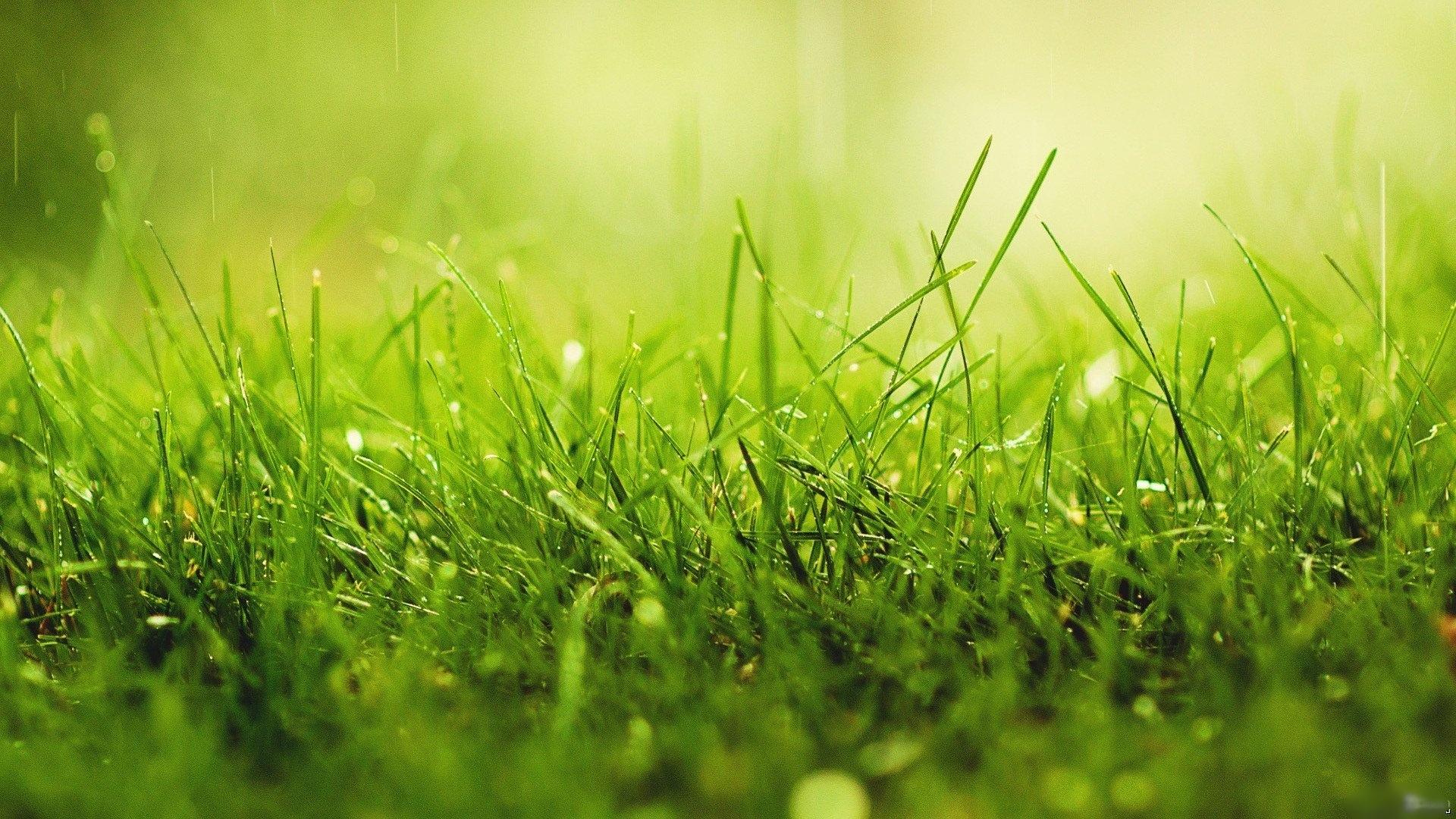 Wallpaper Grass Growth Lawn Beam 1920x1080 Wallpaperup 673680 Hd Wallpapers Wallhere