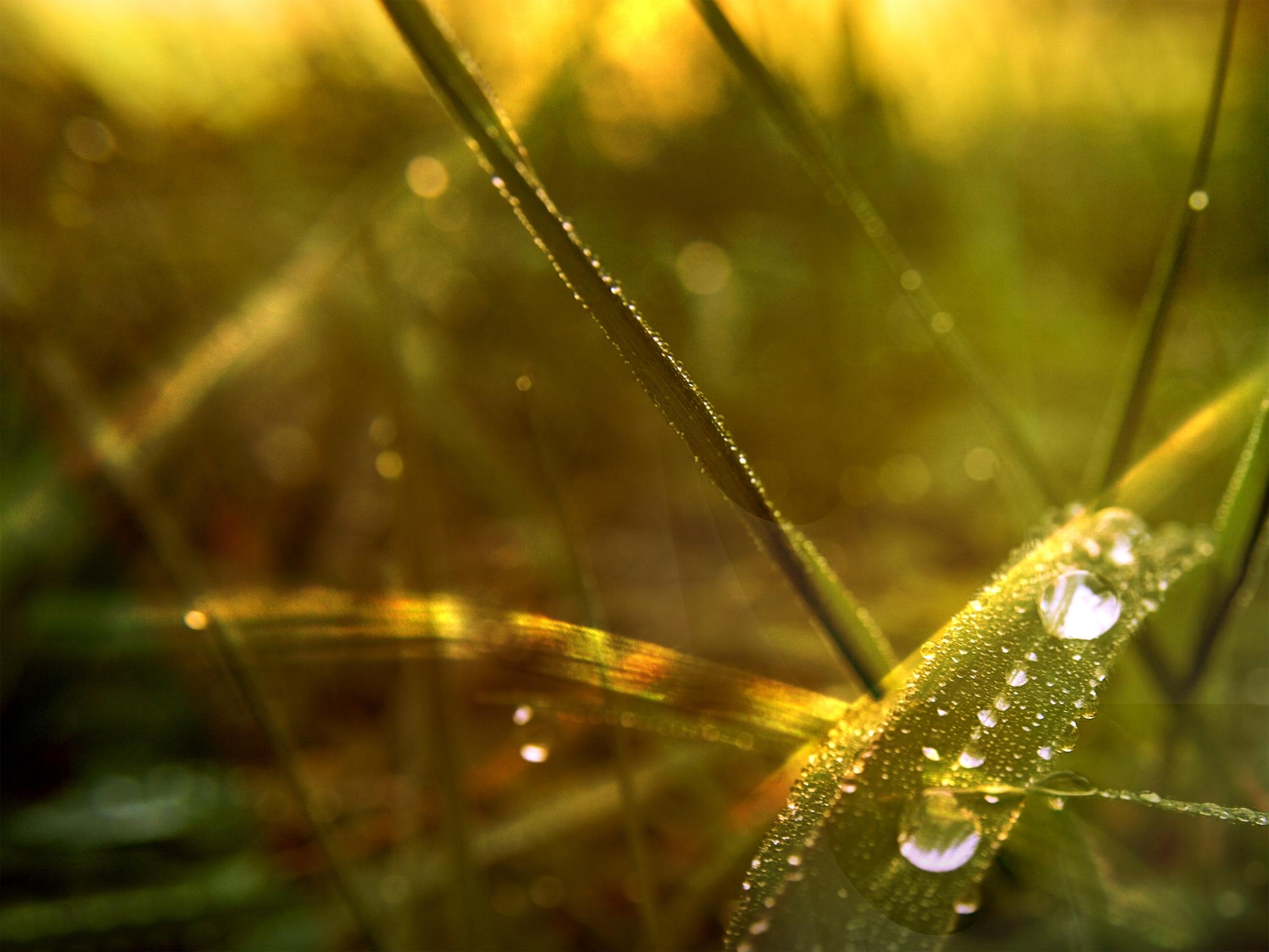 корж пригорел, картинки роса и солнце старается менять прически