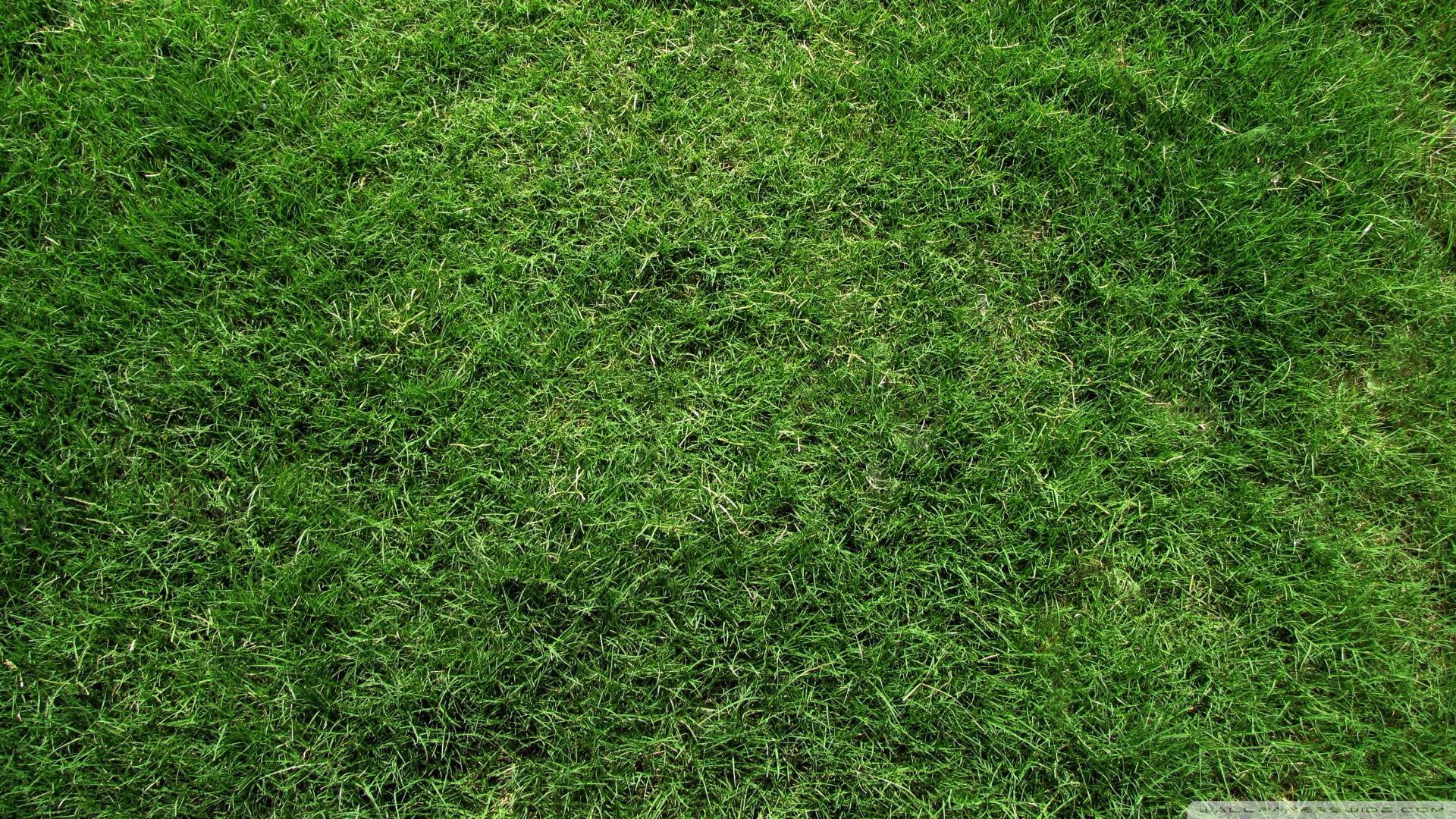 Sfondi Piante Verde Foglia Fiore Prateria Pianta Prato