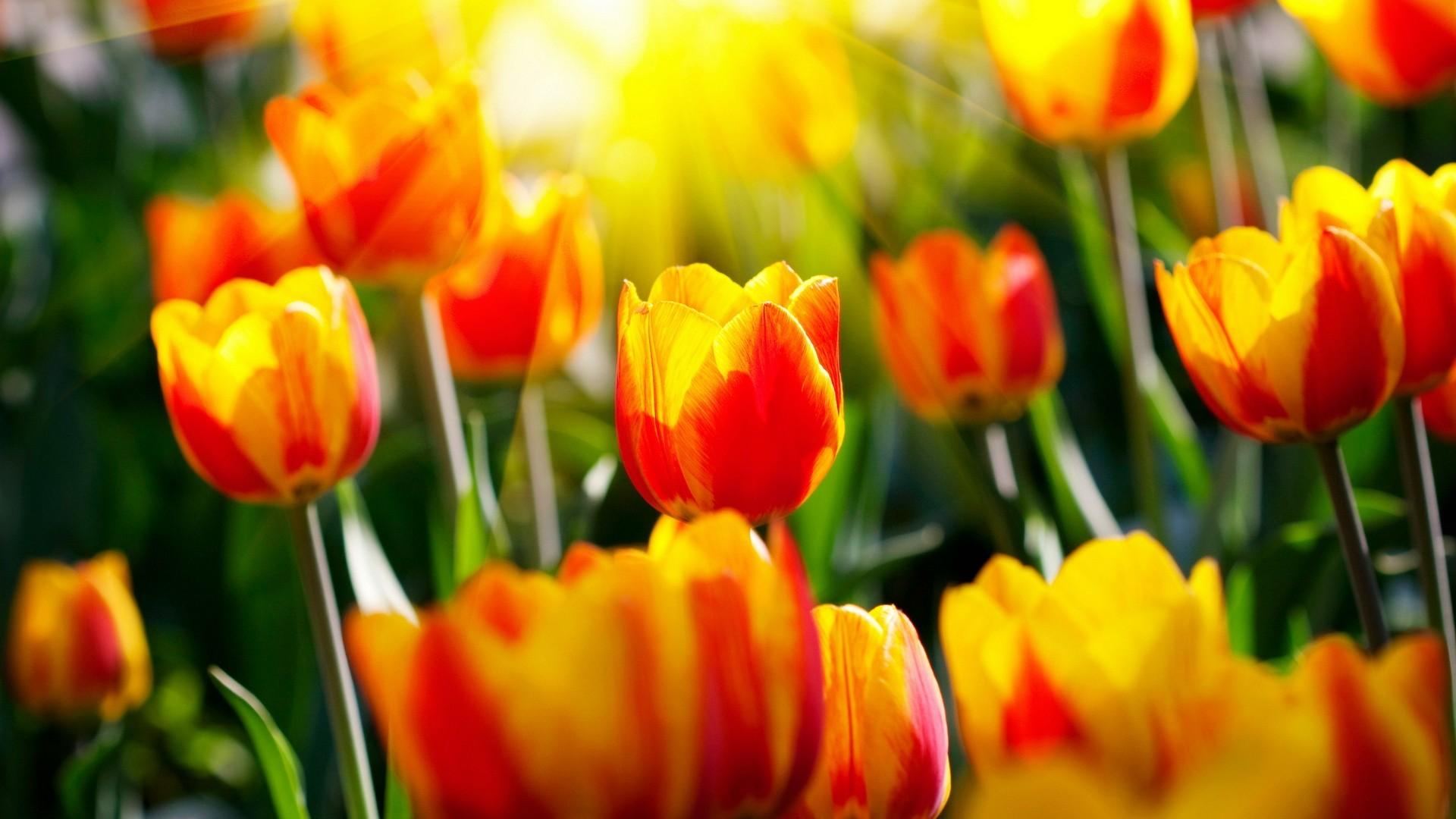 Весенние цветы красивое