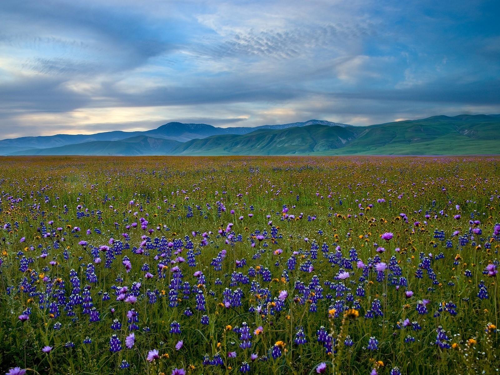 фотографии цветущего луга