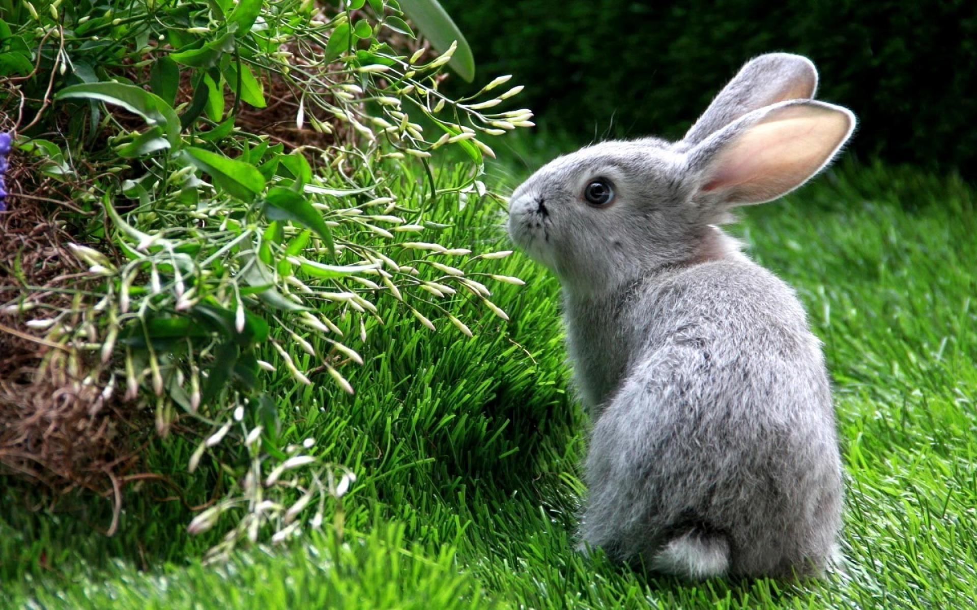 фото зайчика красивые гости уже появляются