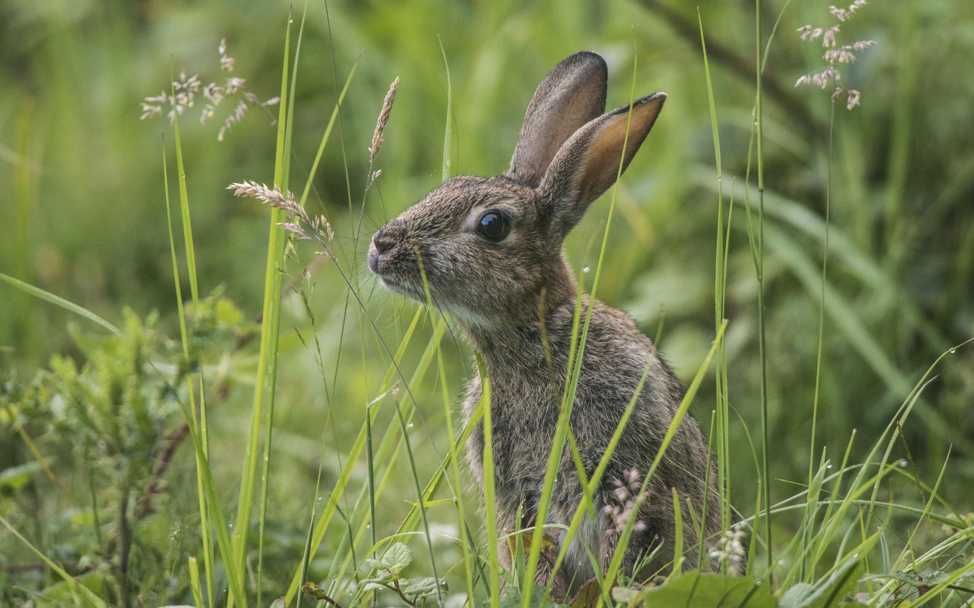 картинки заяц на лугу для