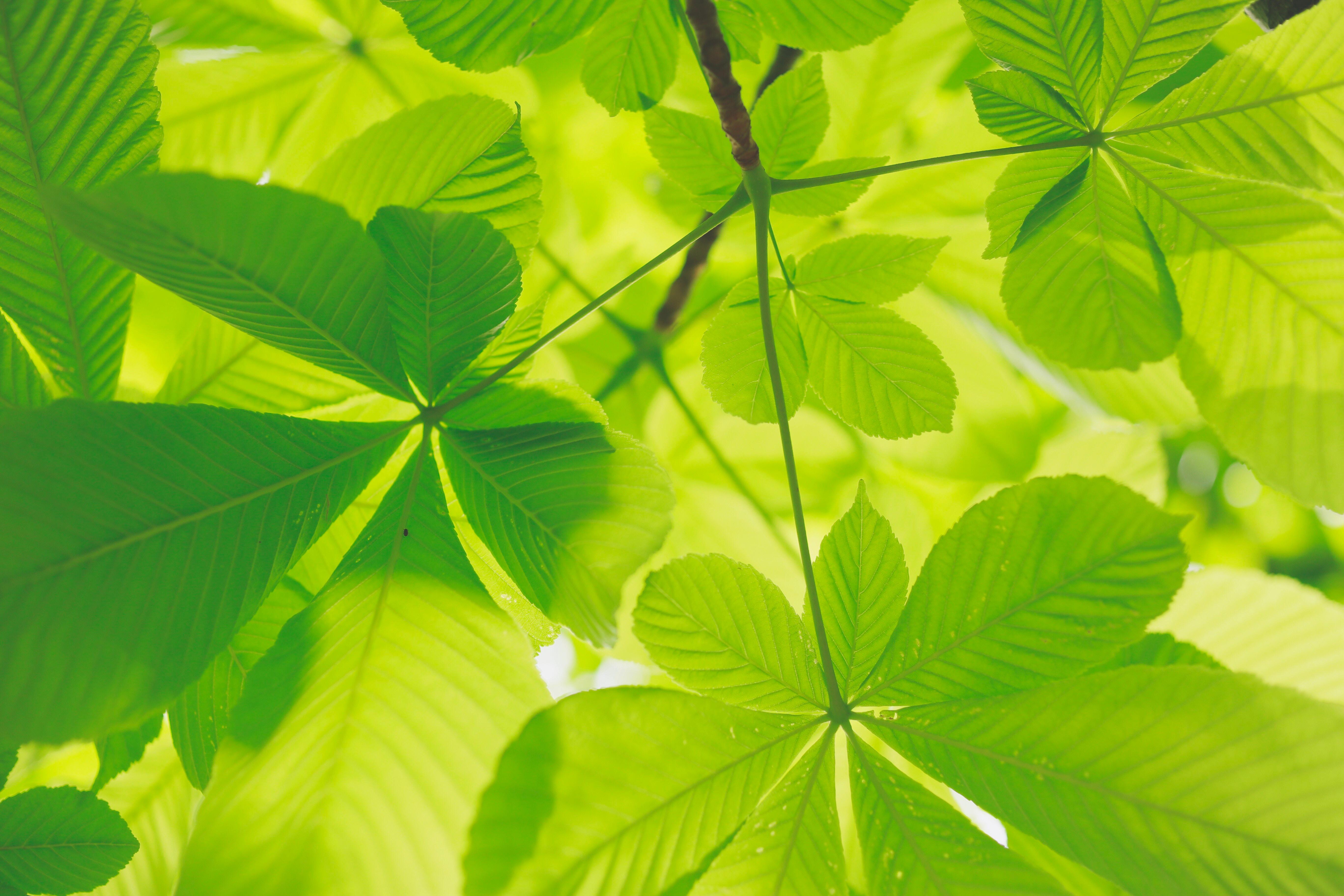 Wallpaper Green Leaves Nature Plants 5472x3648 Sam50