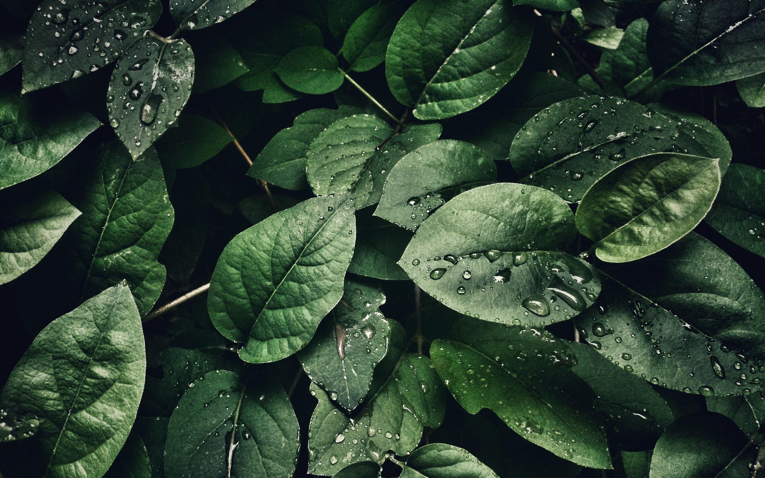 wallpaper hijau tanaman daun