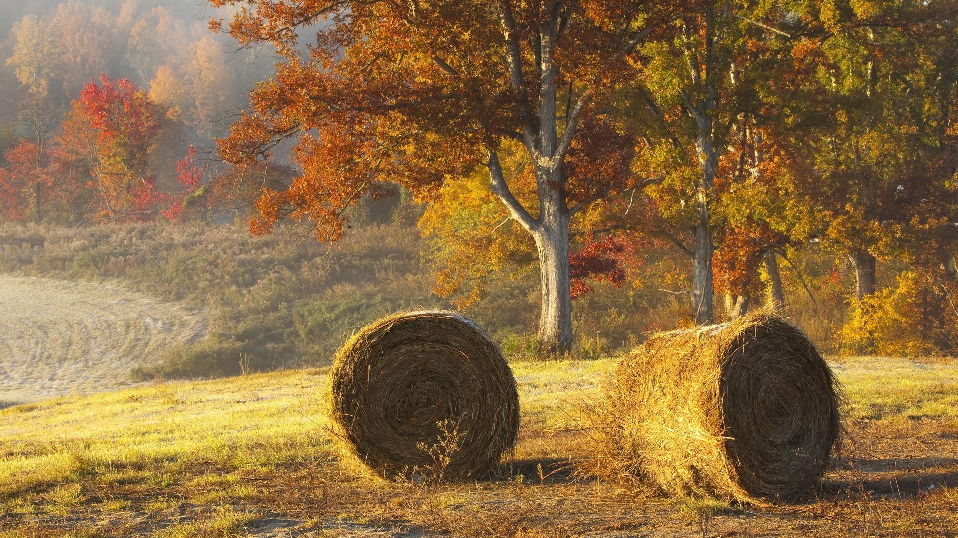 все хорошо, осень в поле картинки красивые продаже вариант отдельно