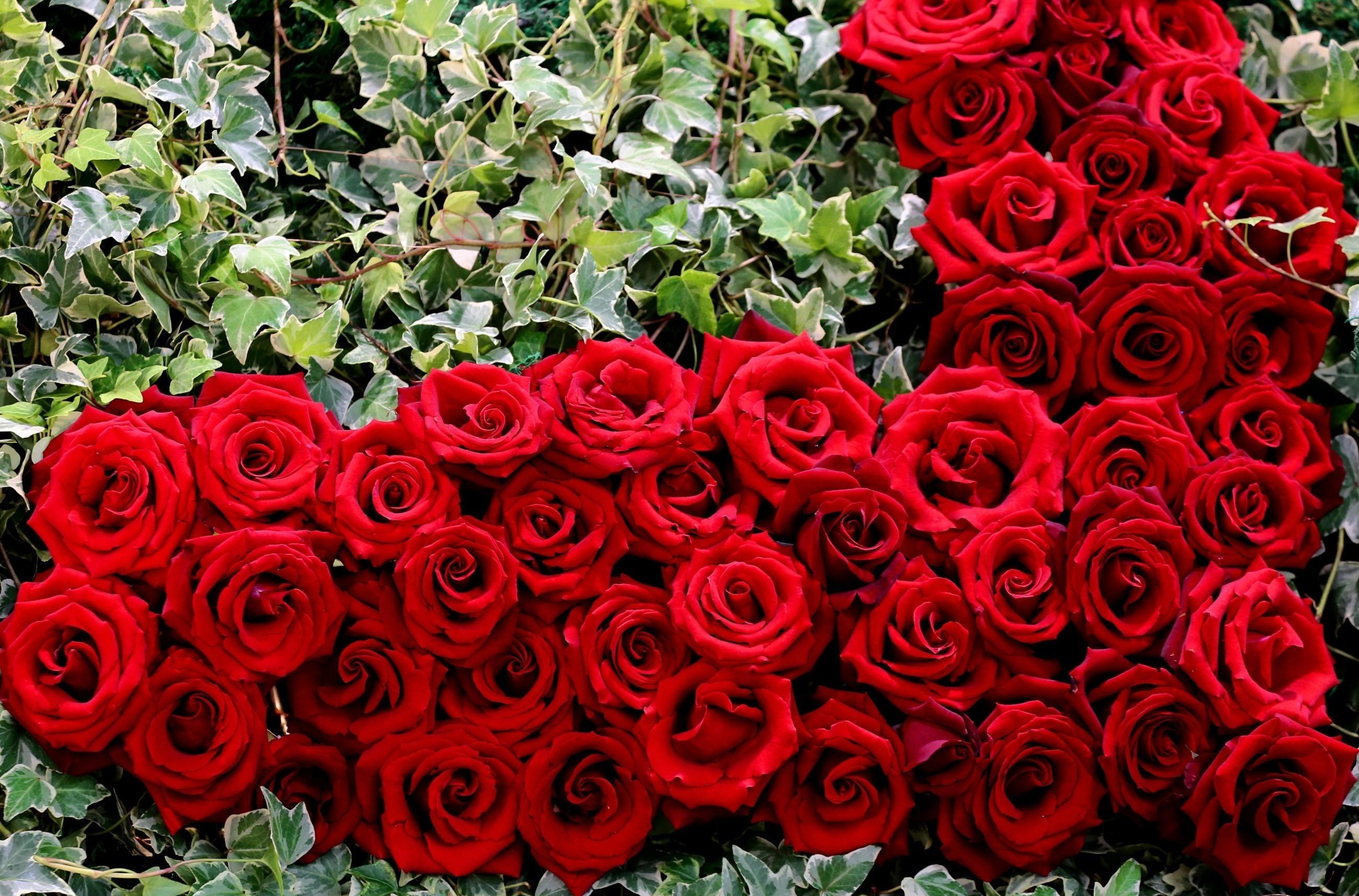 гладкой кожи покажи мне фото цветы розы волгоградская
