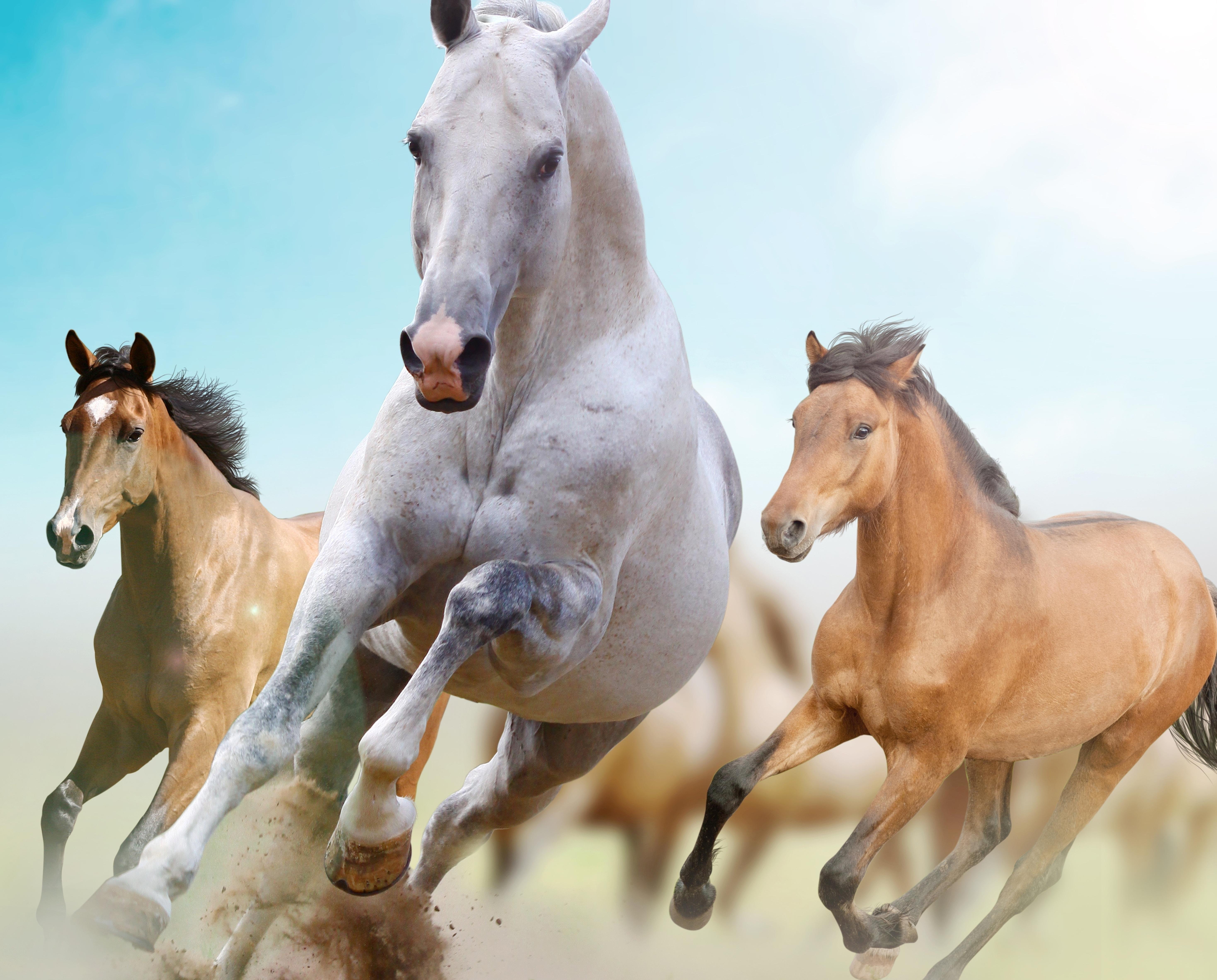 Wallpaper Horses Running Freedom 5873x4729