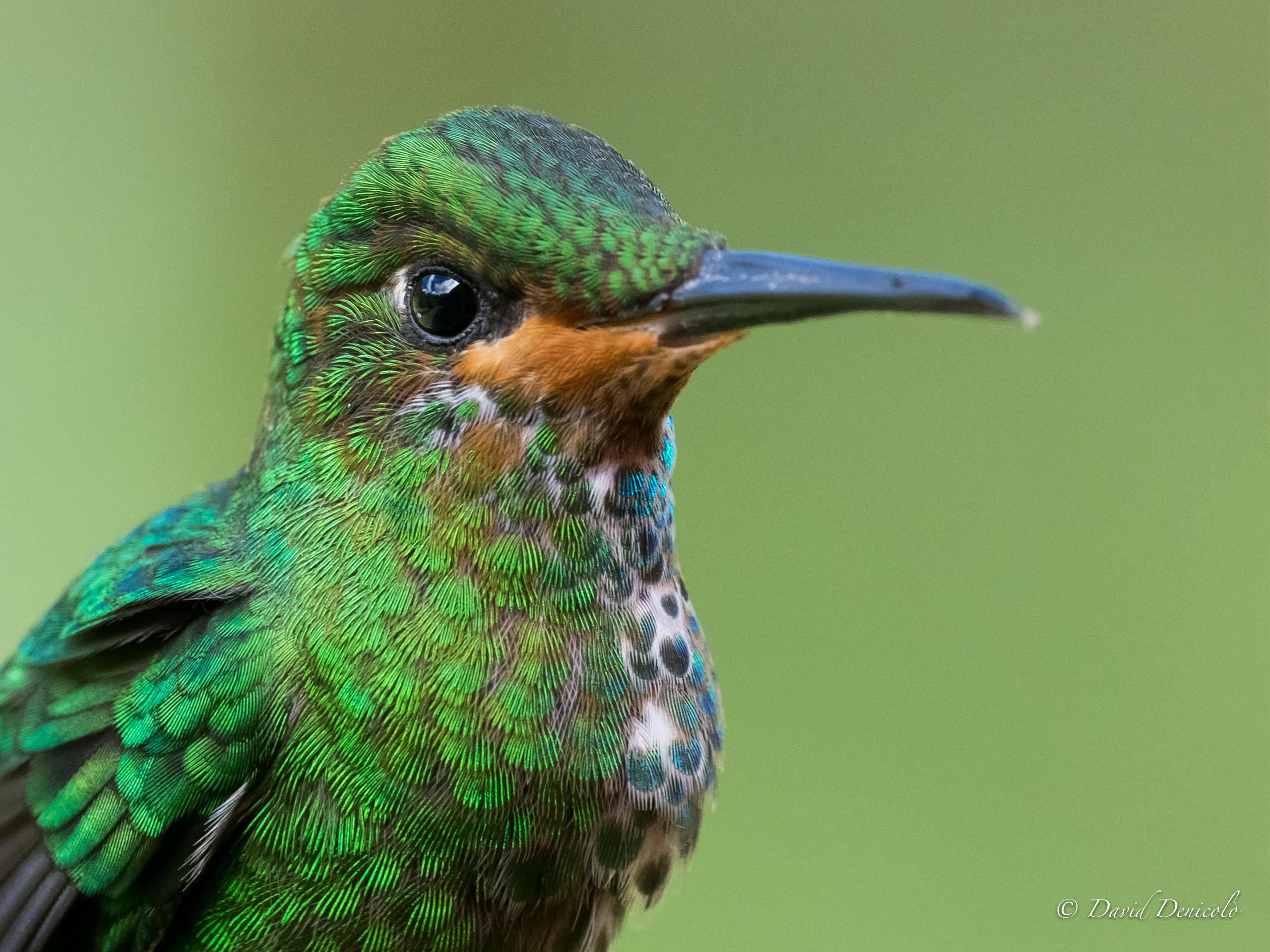 Wallpaper Hummingbird Colibri Bird Uccello Wings Colors