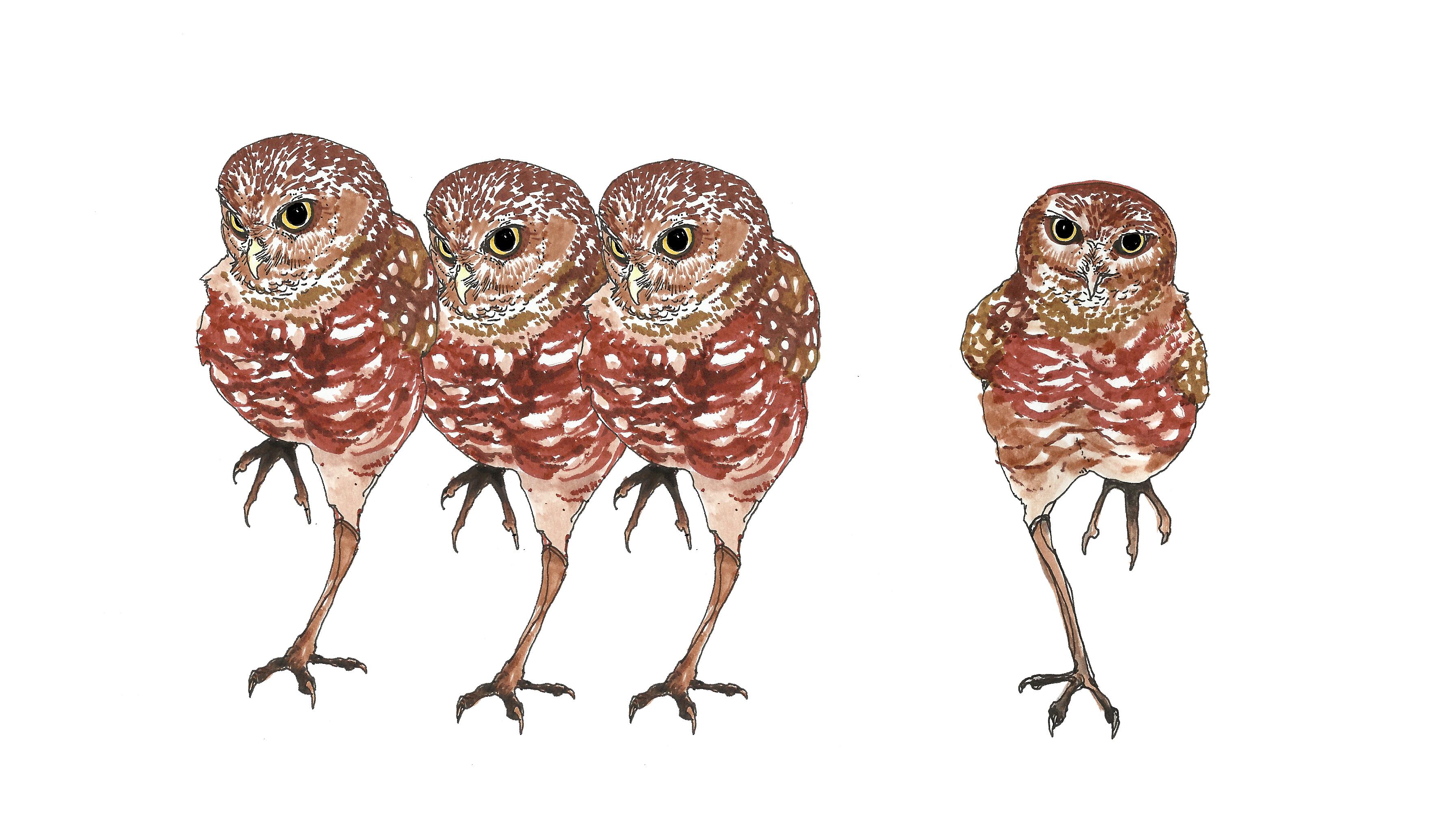 Wallpaper Ilustrasi Burung Buas Burung Hantu Paruh Fauna