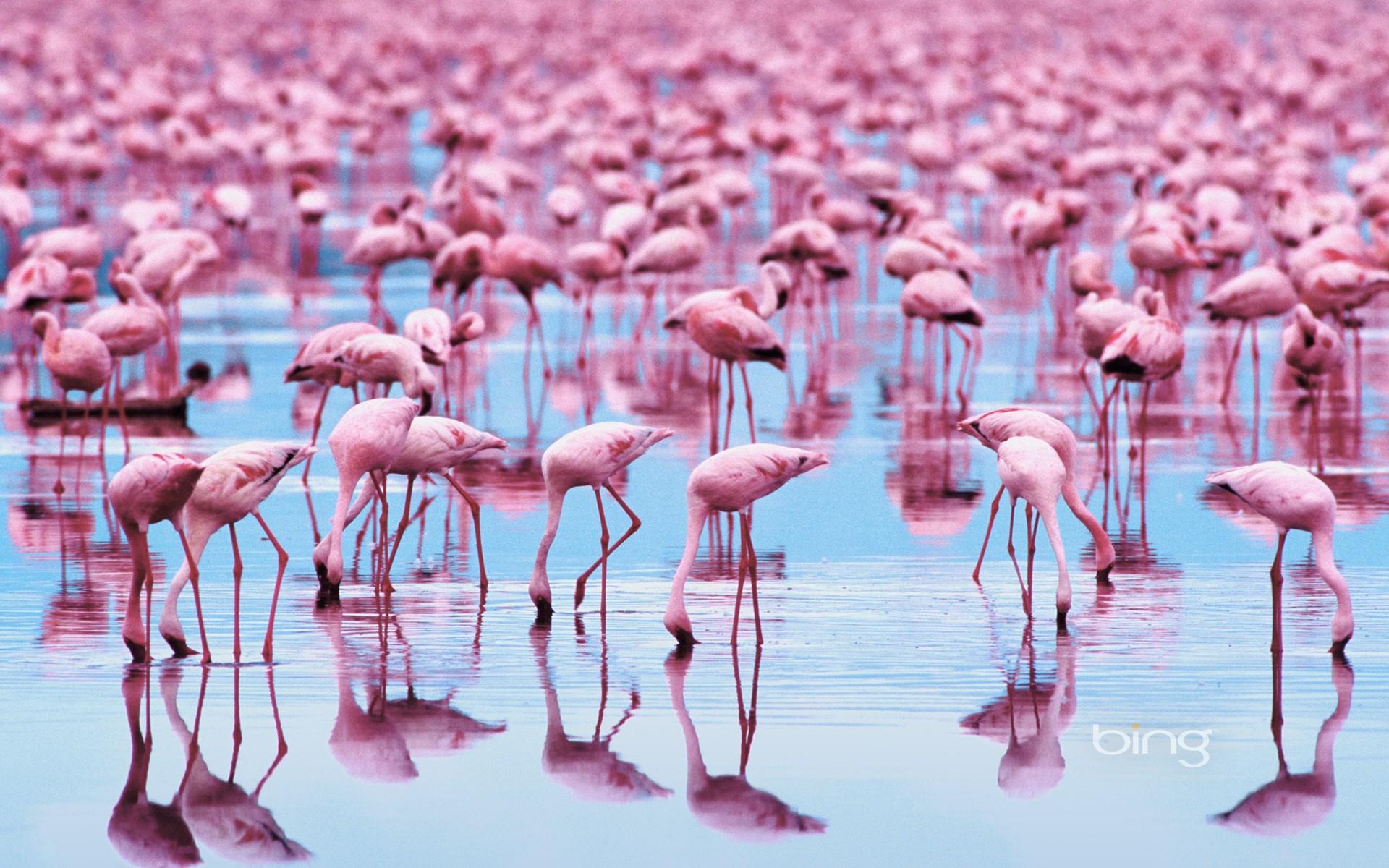 Wallpaper Ilustrasi Burung Burung Refleksi Flamingo Burung