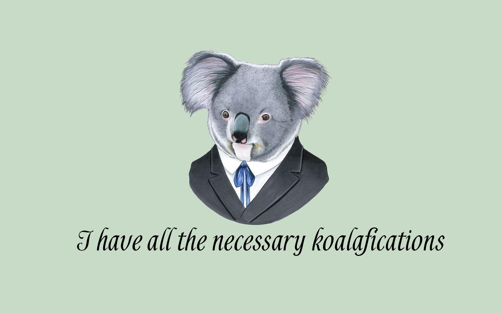 Good Wallpaper Koala Cartoon - illustration-quote-digital-art-animals-simple-background-minimalism-humor-text-cartoon-suits-koalas-marsupial-148187  Gallery_30516   .jpg