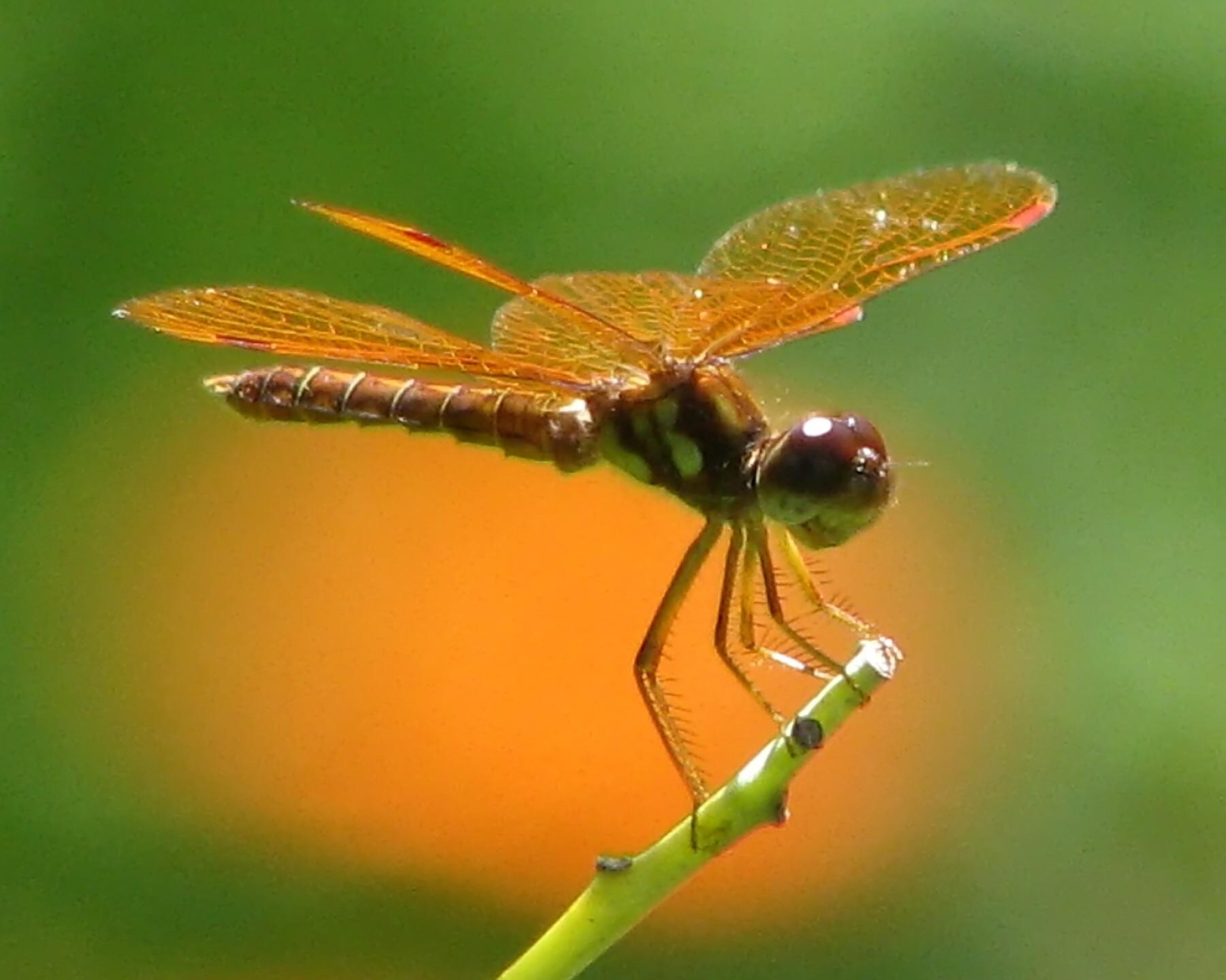 картинка комара и жука верить новостной