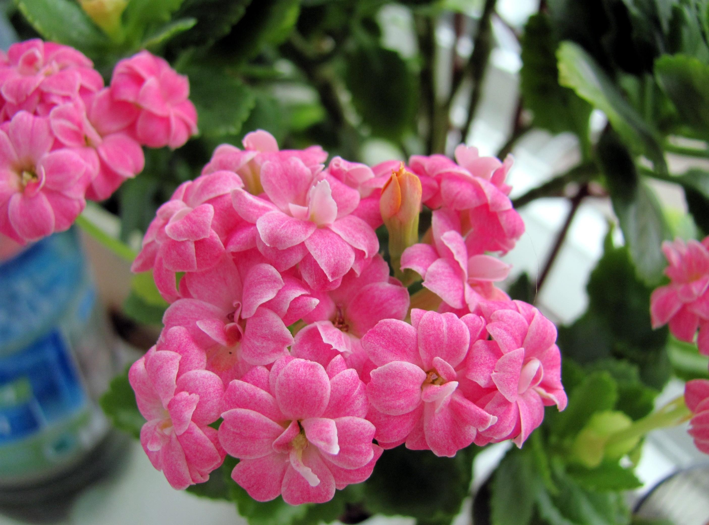 Каталог комнатных растений с фото и названиями 26