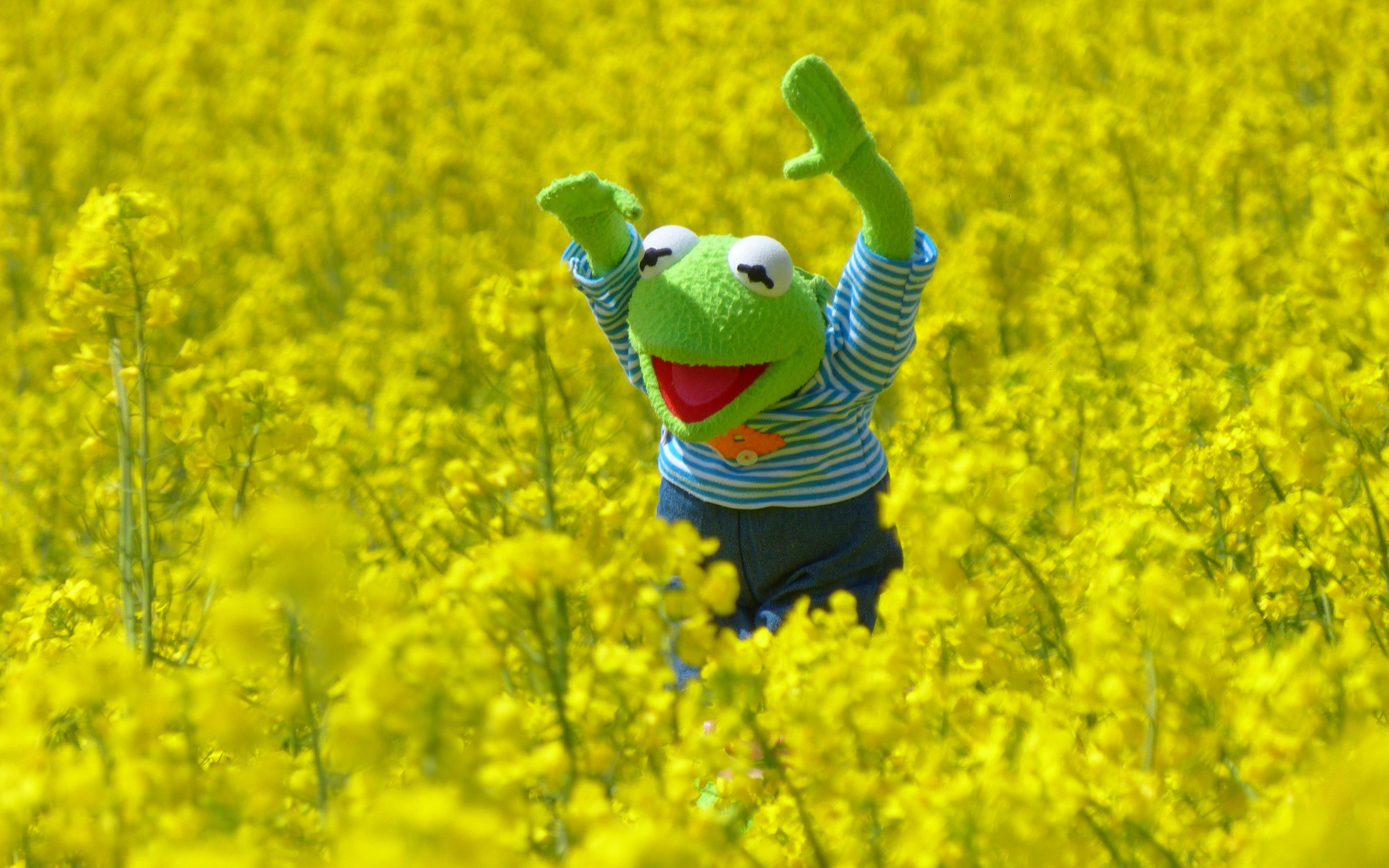 Wallpaper Kermit The Frog Blossoms 4000x2500 Orionsdb