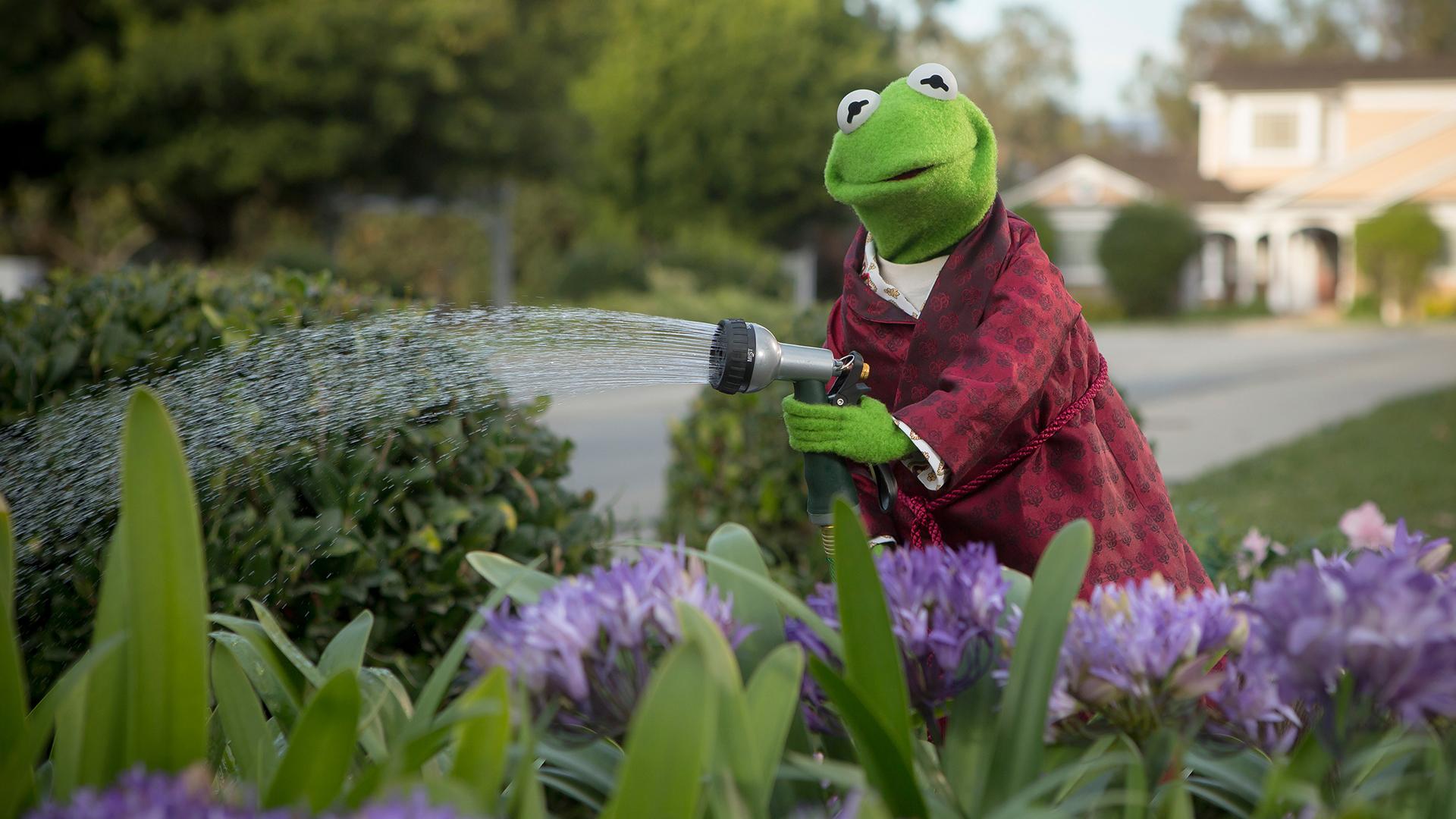 Wallpaper Kermit The Frog Flowers Sesame Street The