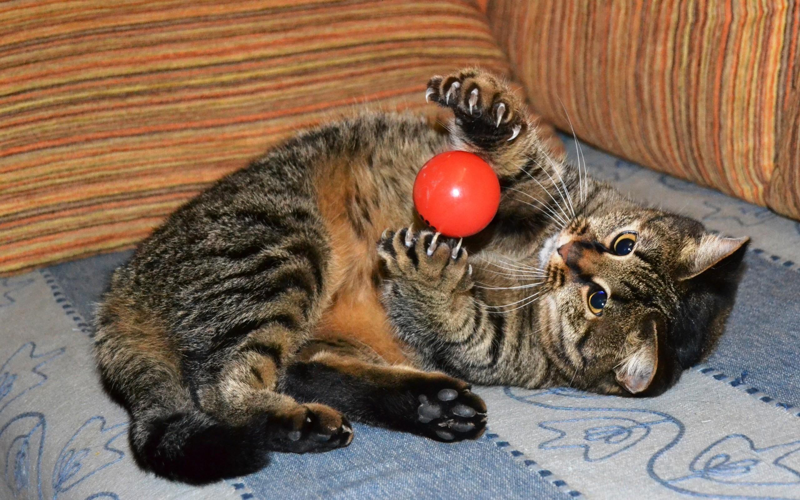 картинки котенок с мячиком антирринум