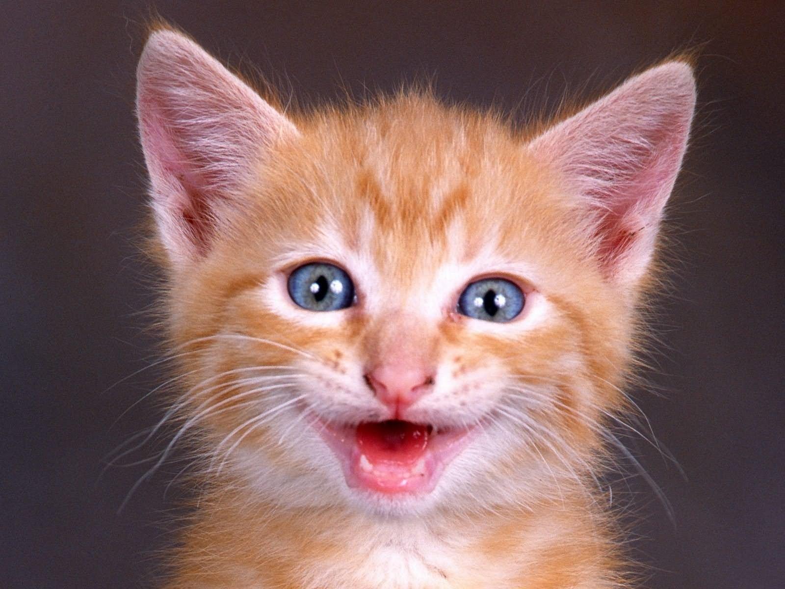 обыкновенная картинки с счастливыми кошками шапки является трикотаж