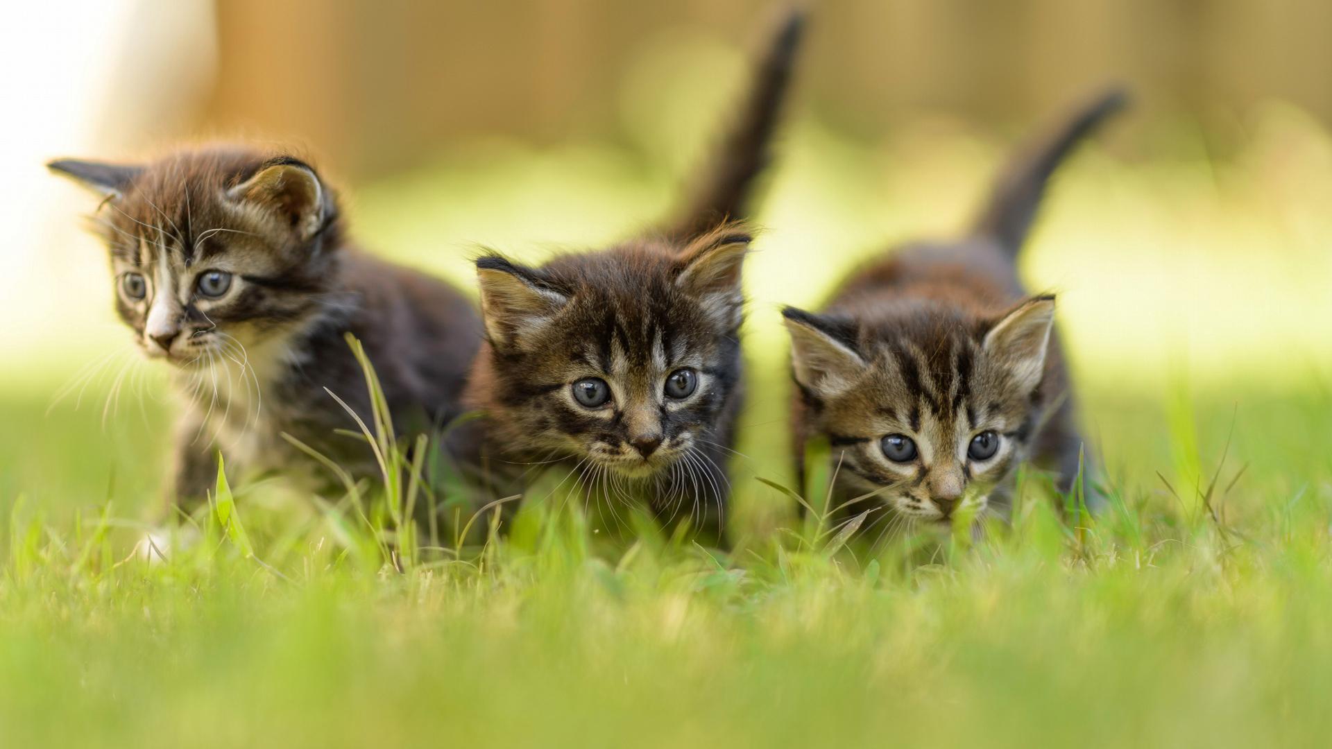 Картинки новые природа котята