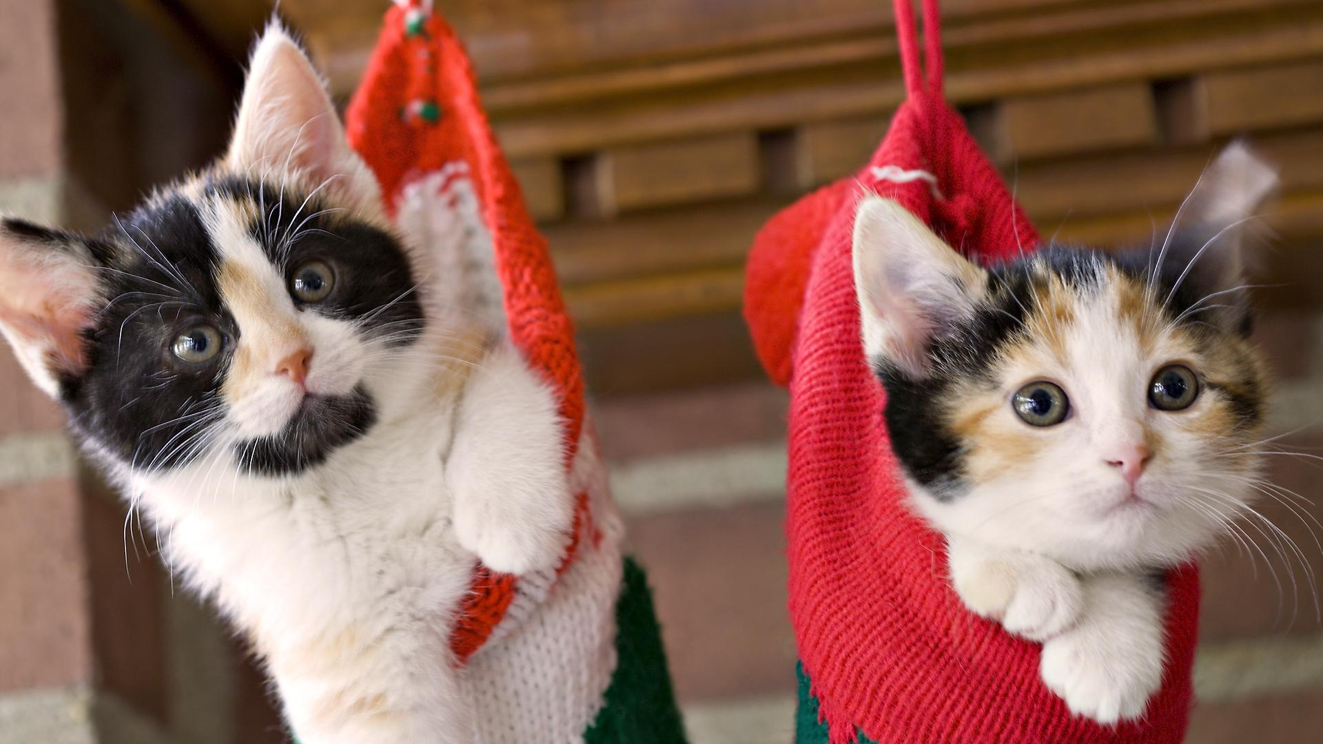 Коты в носках картинки