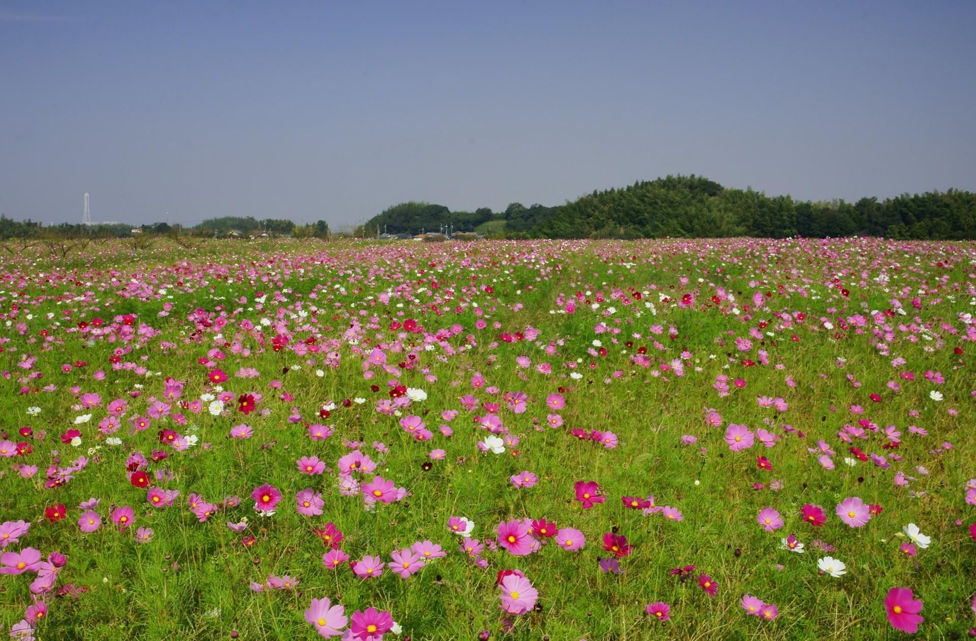 ТОП-7 самых красивых цветущих долин мира фото цветочных 34