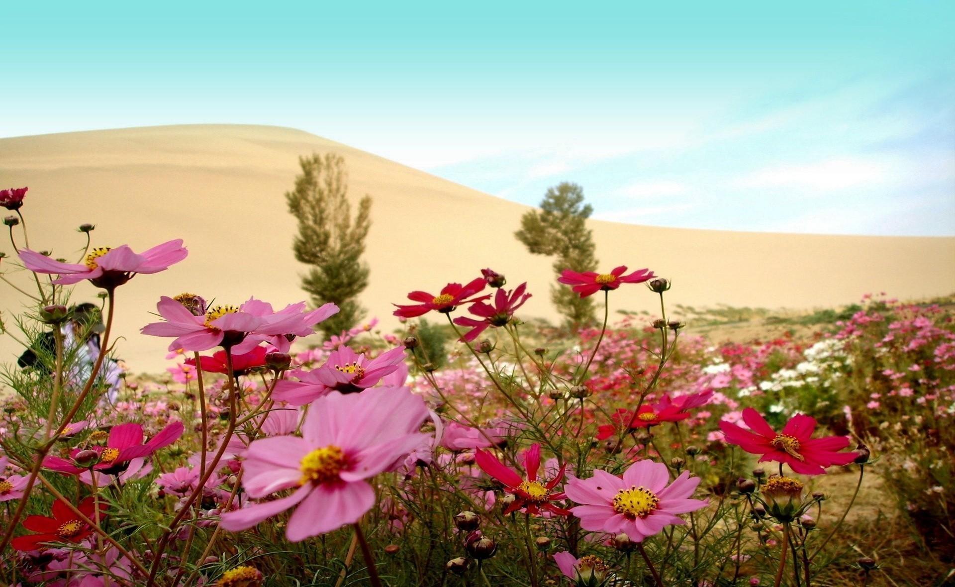 Красивые картинки лето природа цветы на весь