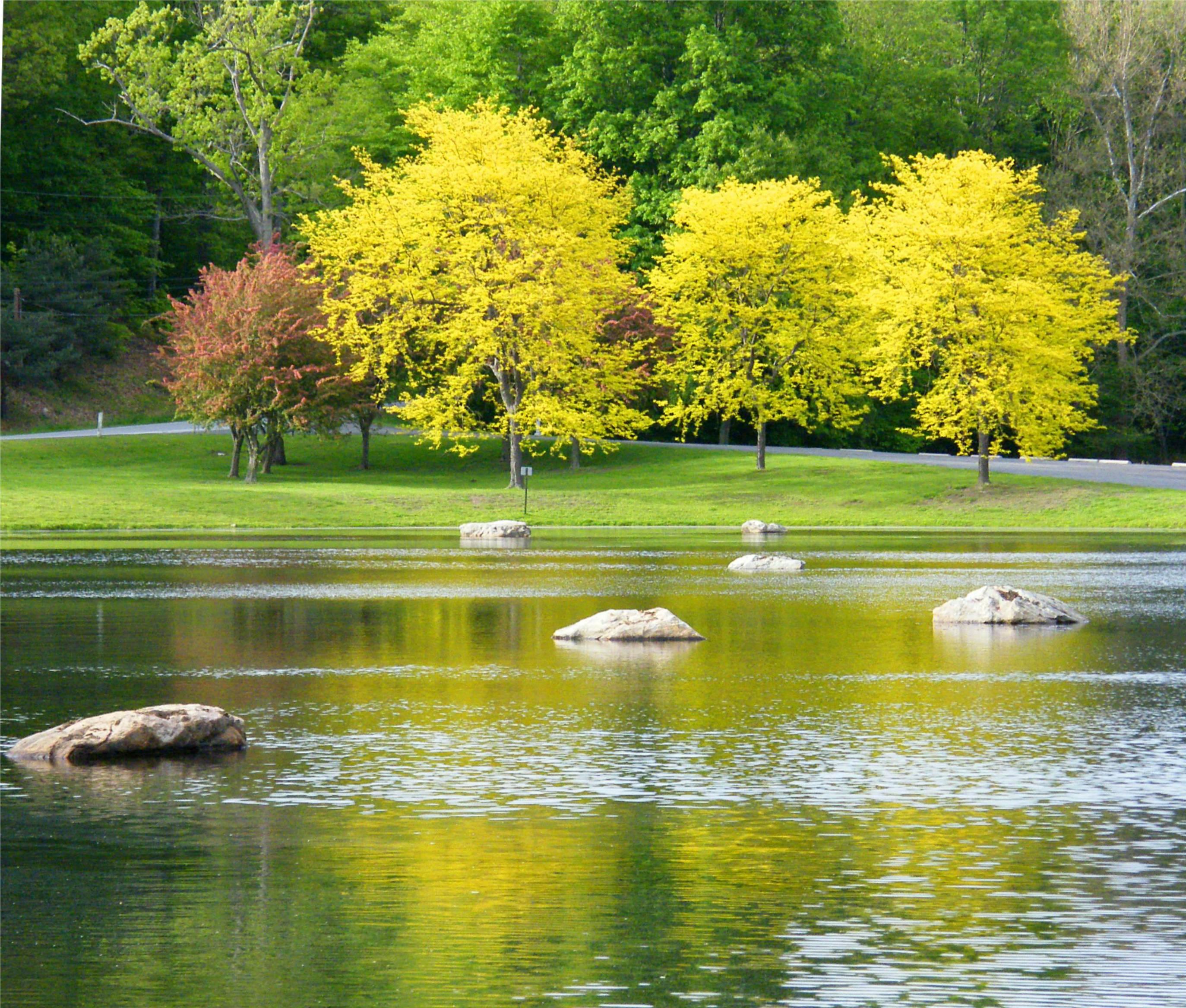 배경 화면 : 호수, 반사, 나무, 물, 노랑, 세, 봄, 바위, 계절, 감상, 금발 ...