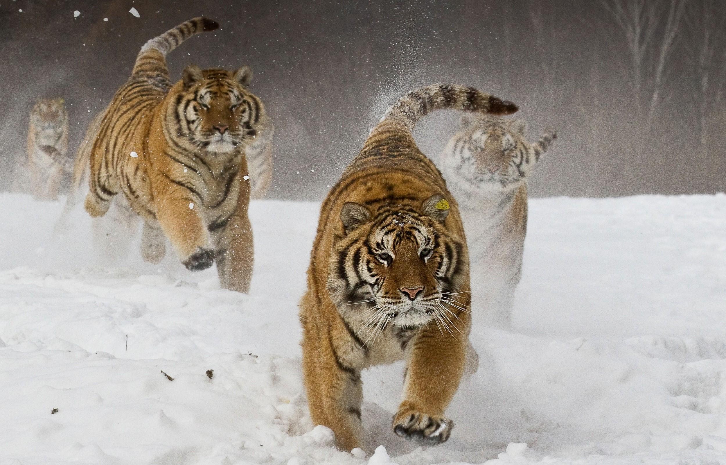 Fond d 39 cran paysage animaux la nature neige hiver for Fond ecran hiver animaux